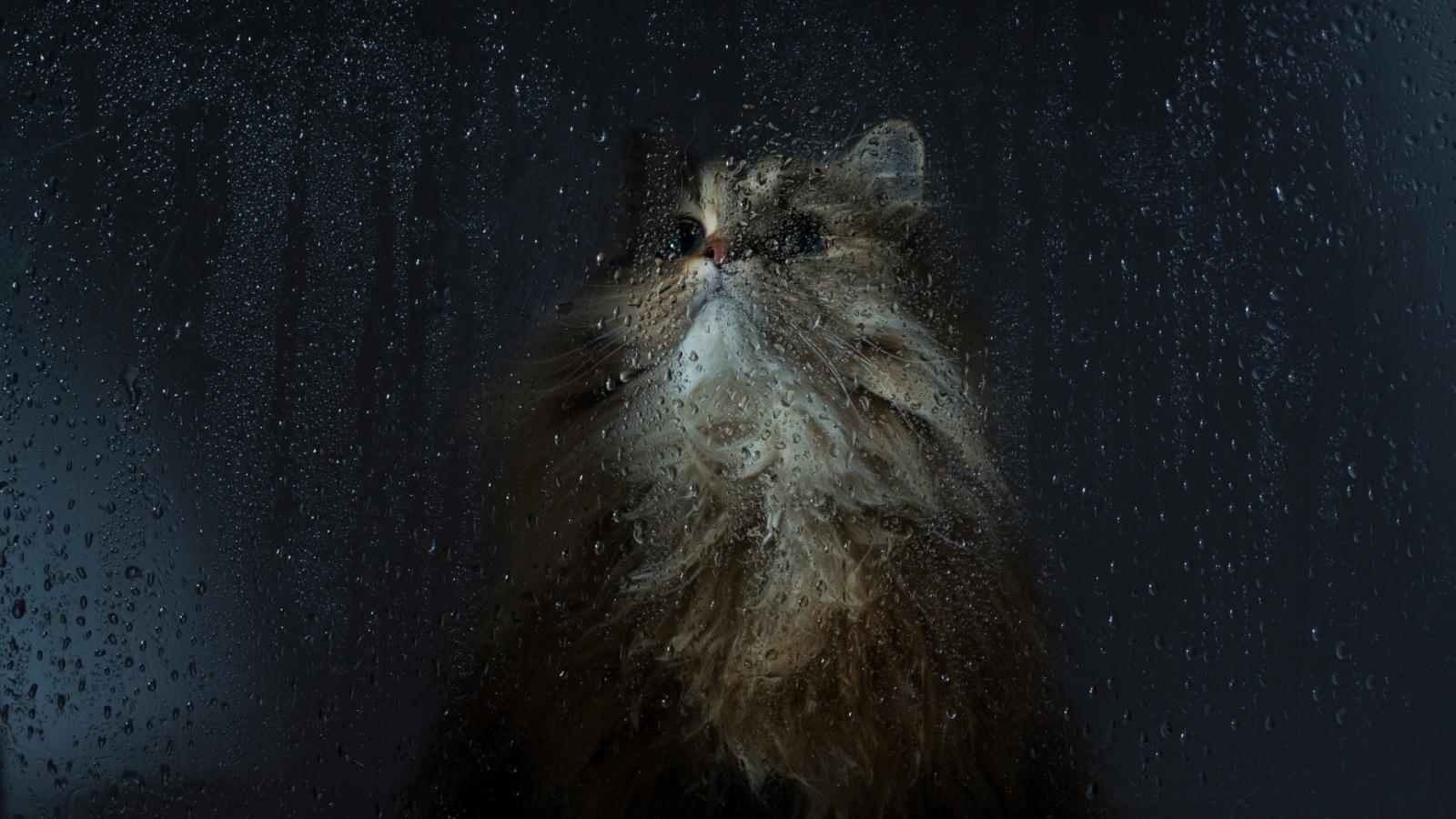 Cat wet window