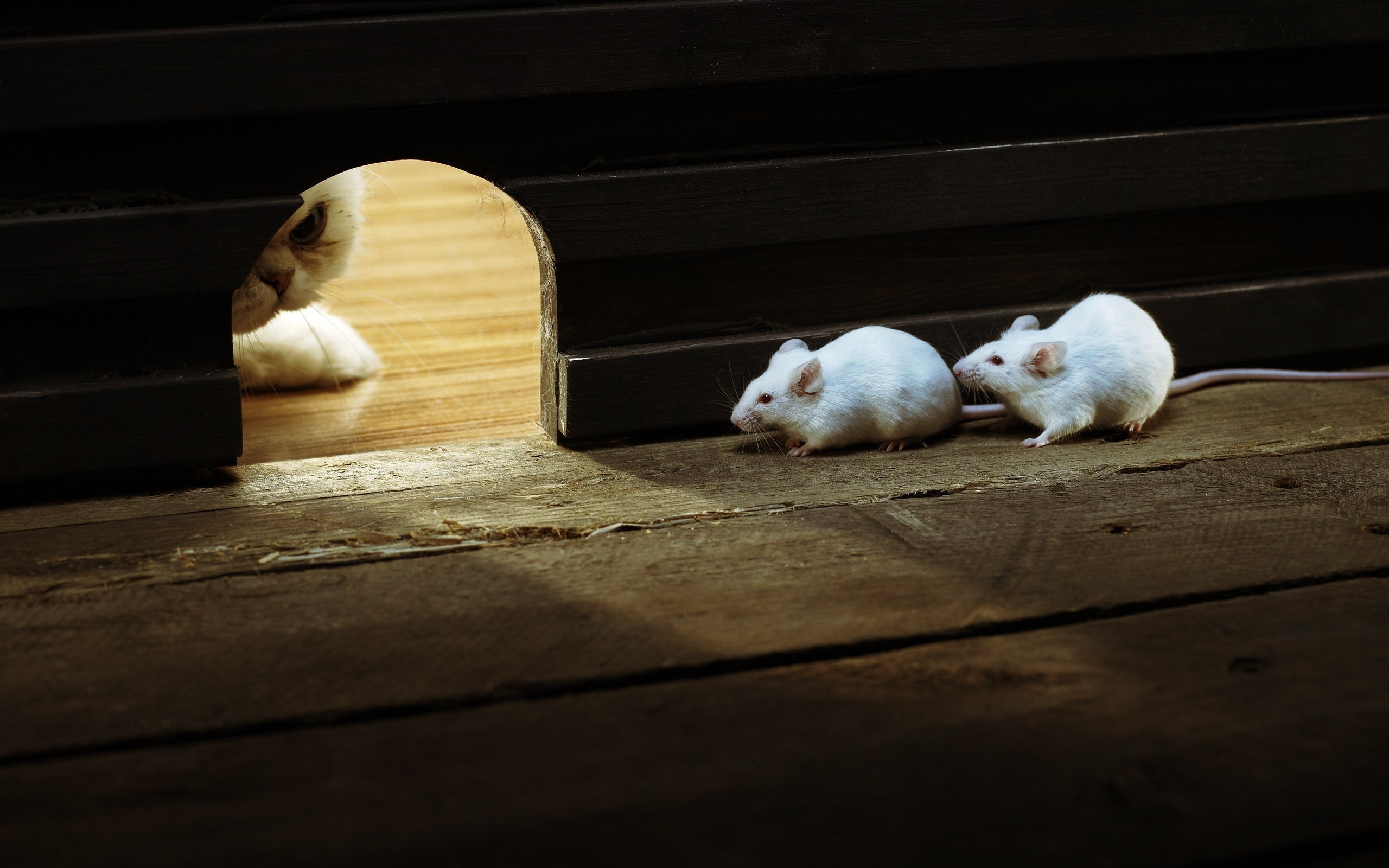 Cat White Mice