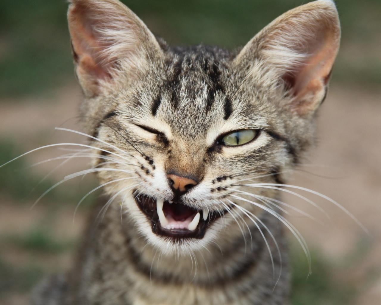 Cat wink