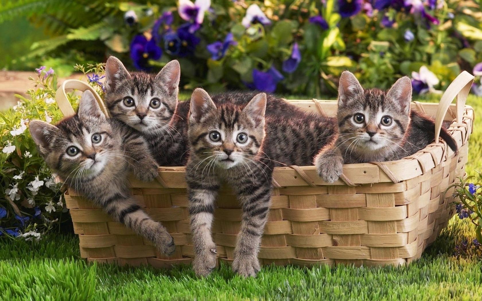 Cats Basket