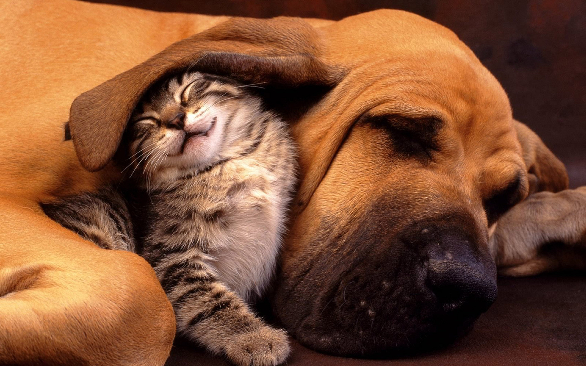 Cats dog cuddle