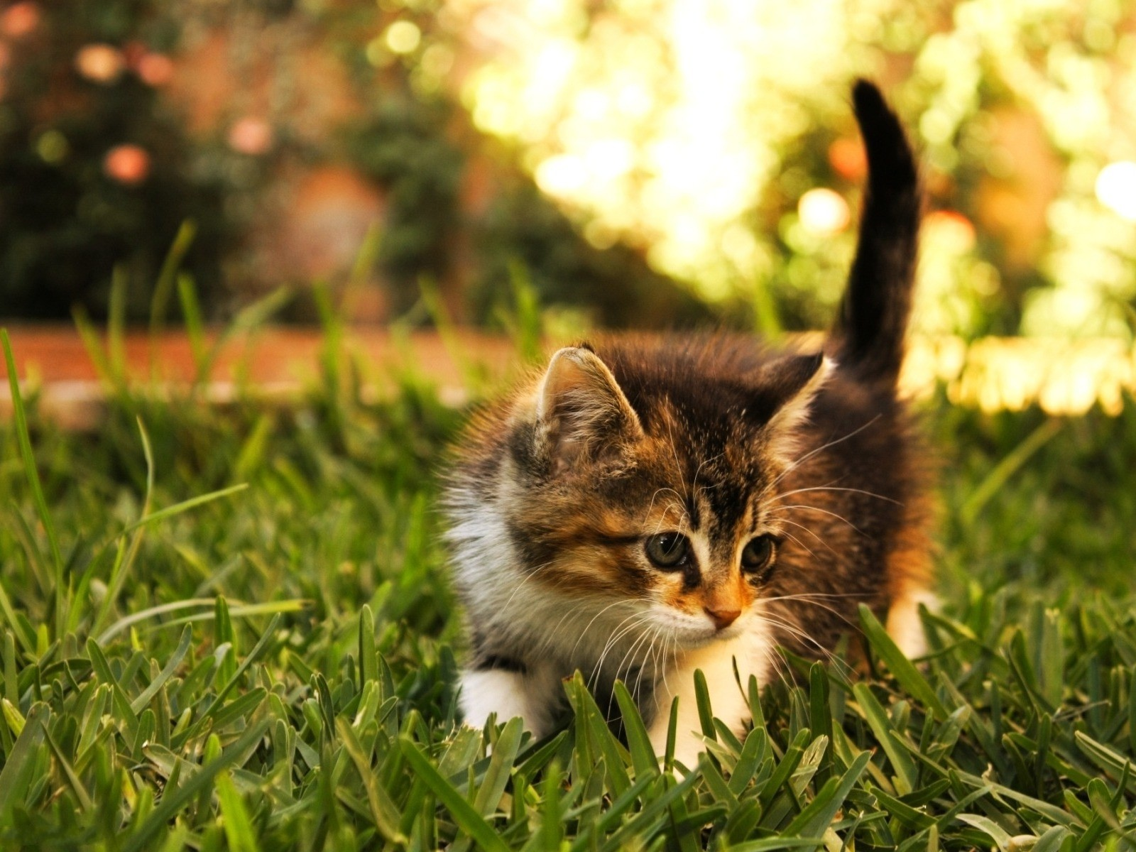 Beautiful Cats Animals Wallpapers Mx