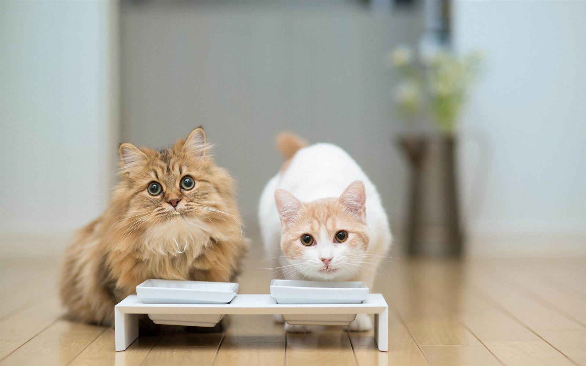 Cats Milk