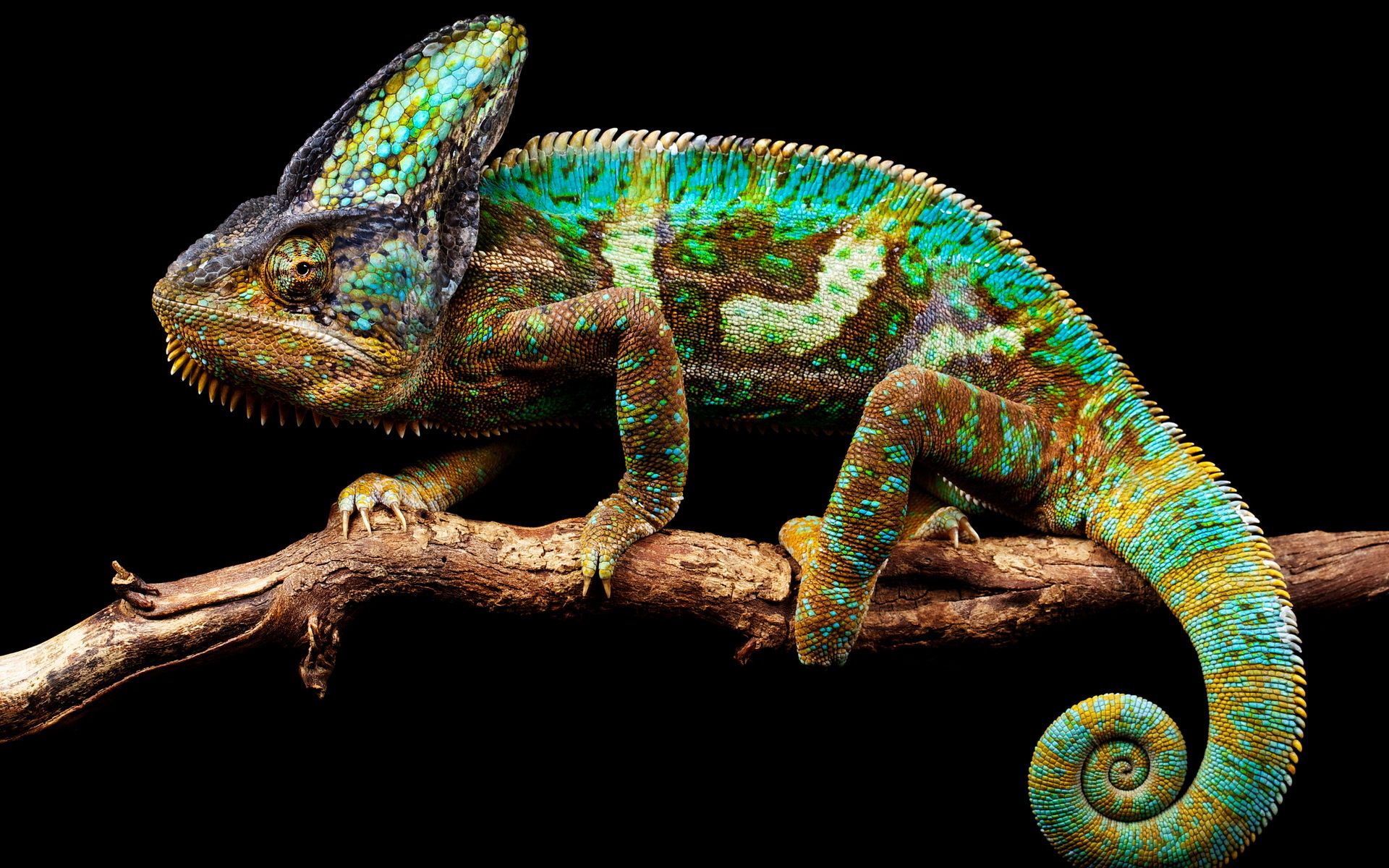chameleon wallpaper 1920x1200 - photo #11