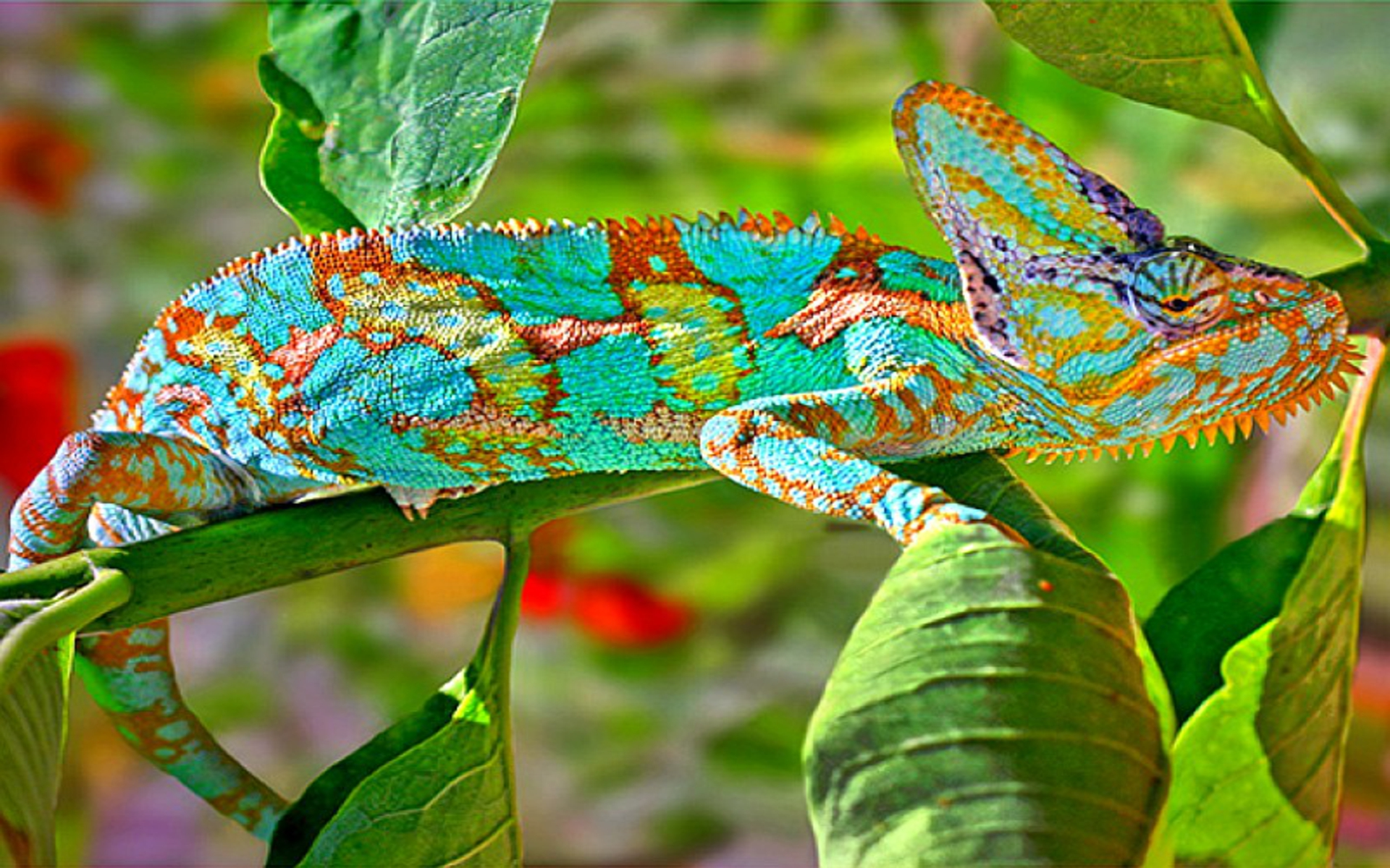 DOWNLOAD: chameleon hdr free background 2560 x 1600