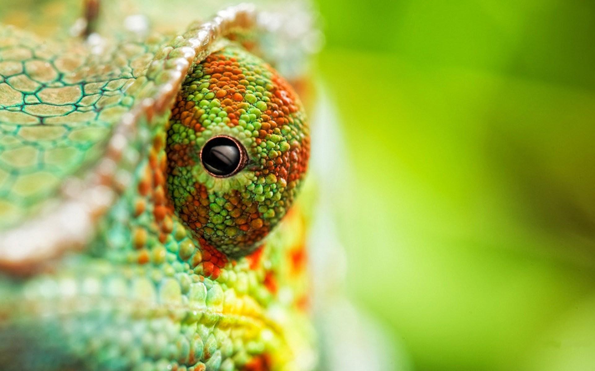 Chameleon Eye