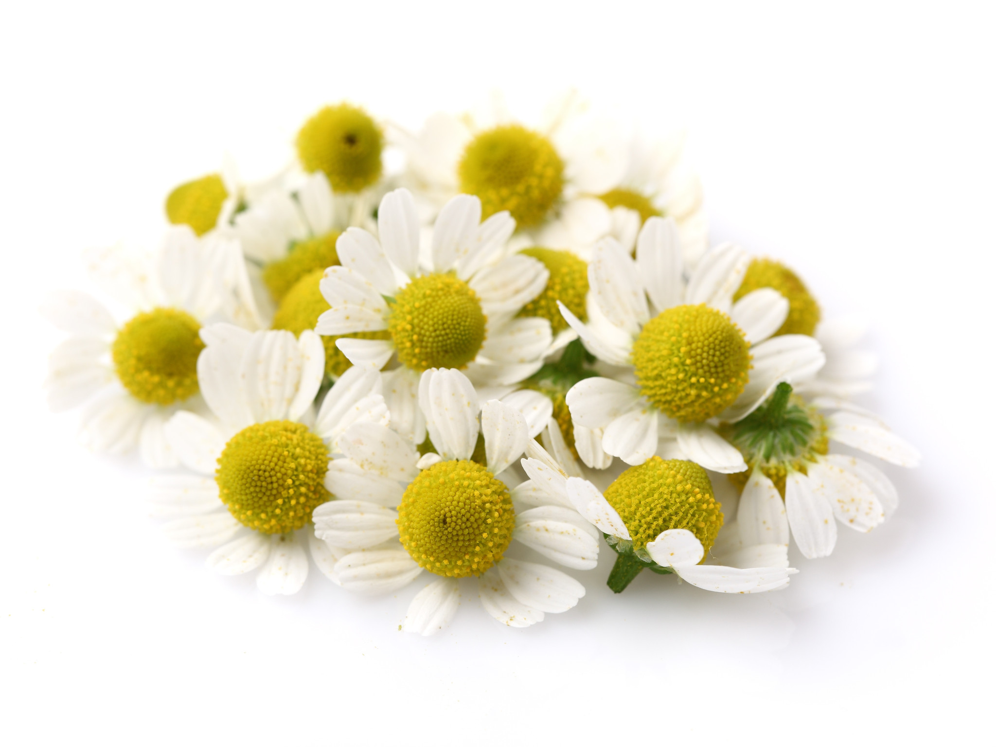 Chamomile Oil 3 dilutions