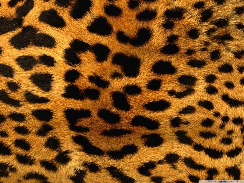 cheetah fur wallpaper