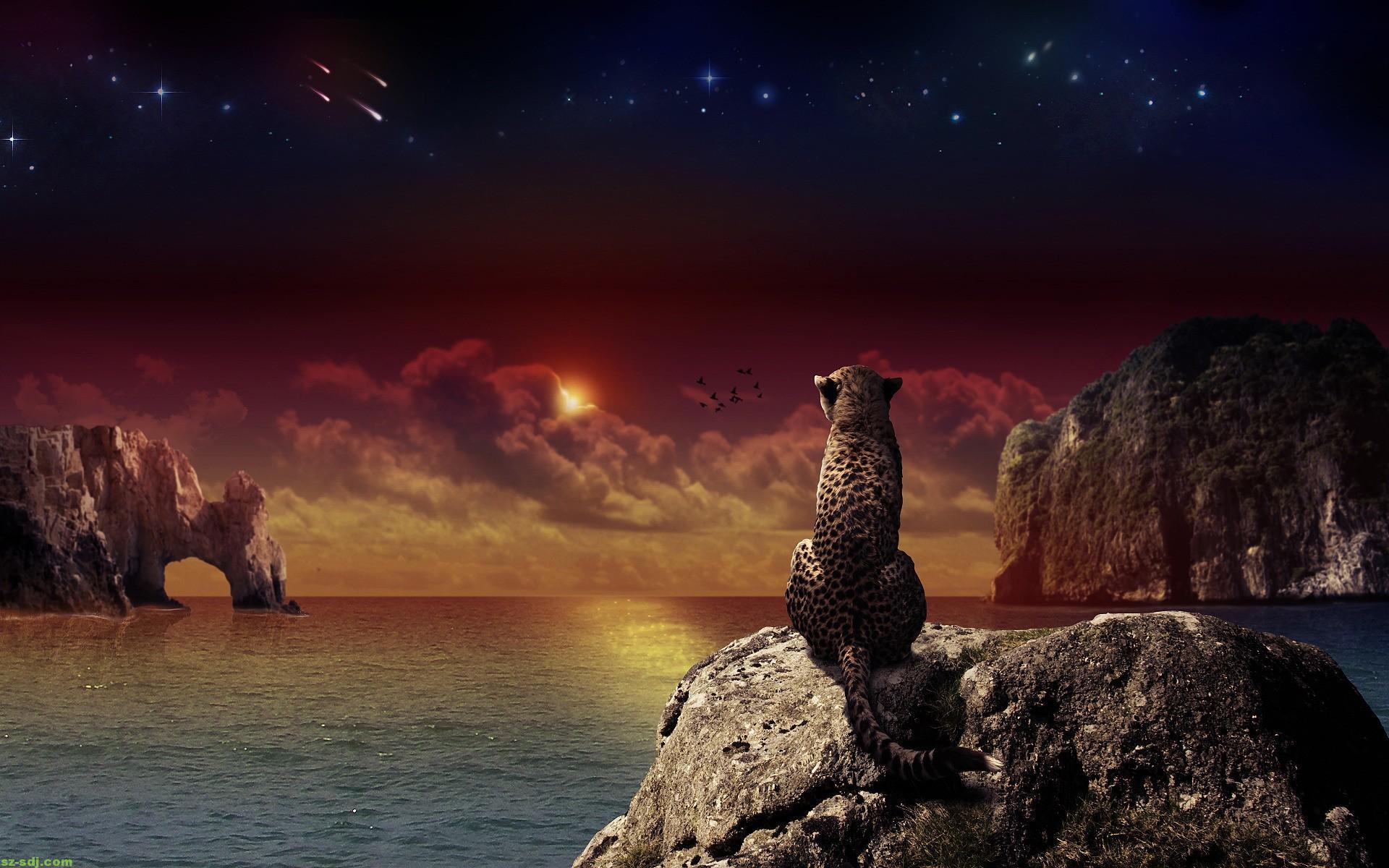 Awesome Cheetah Fantasy Wallpaper