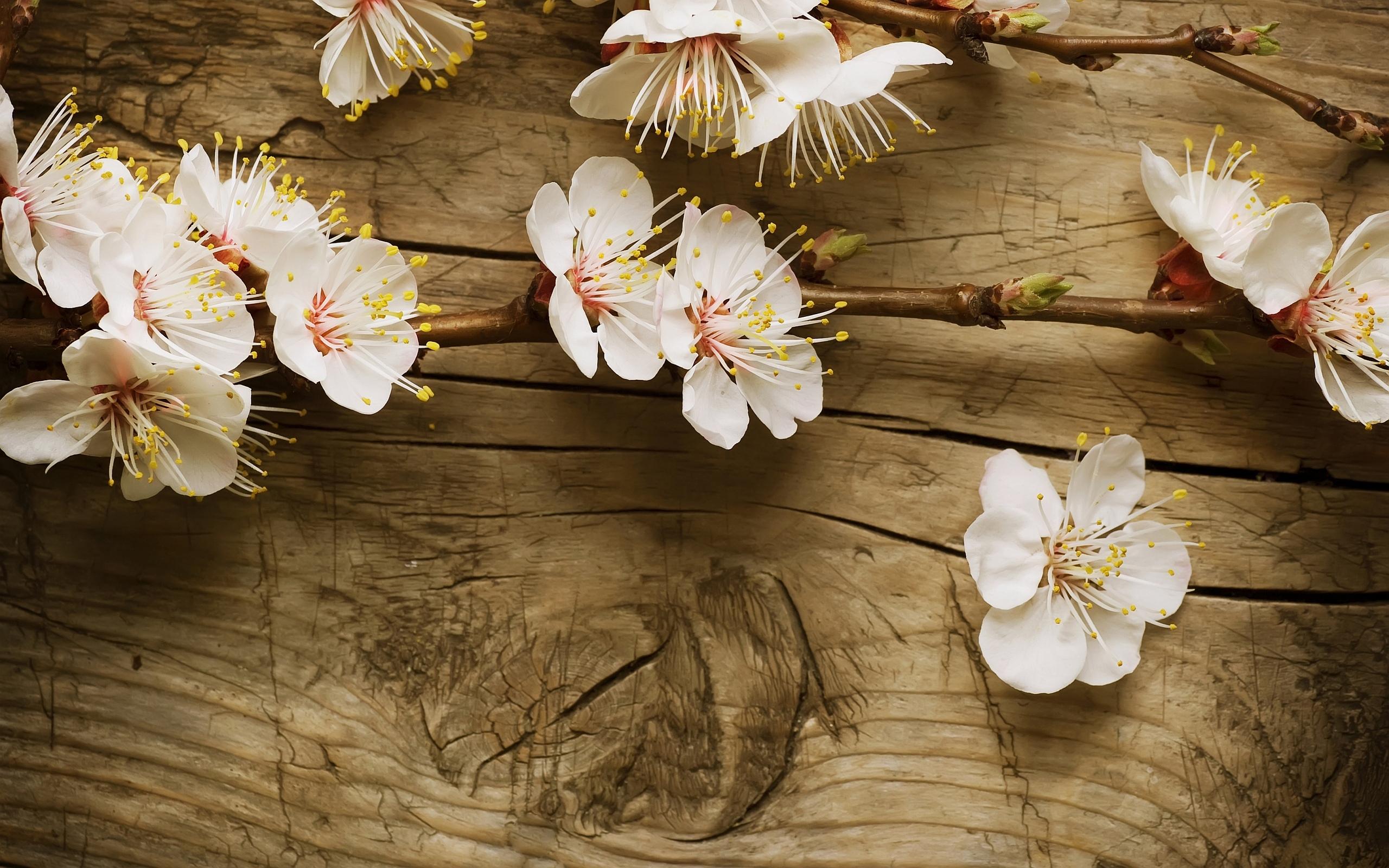 Cherry Blossom Wood