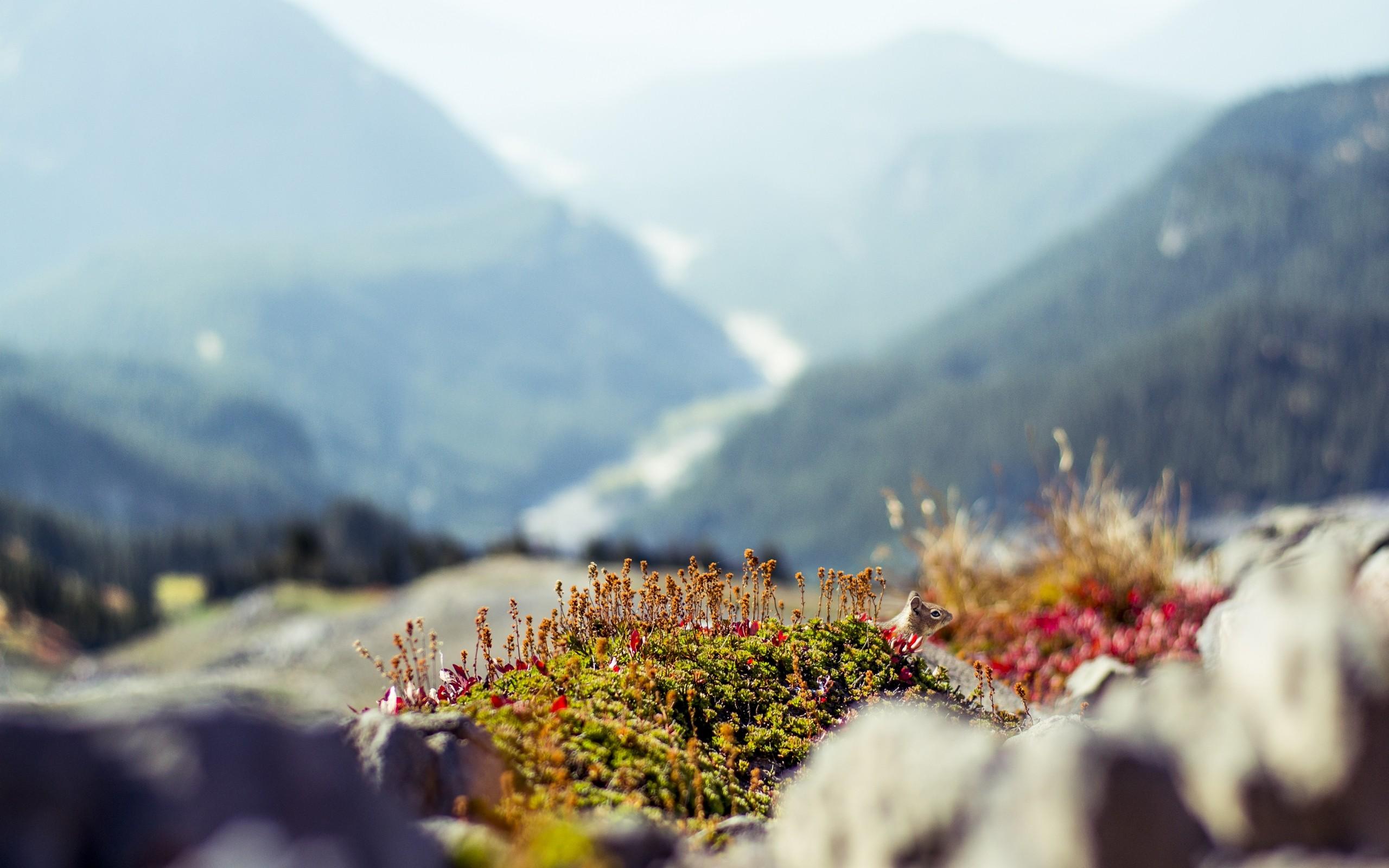 Chipmunk in mountains