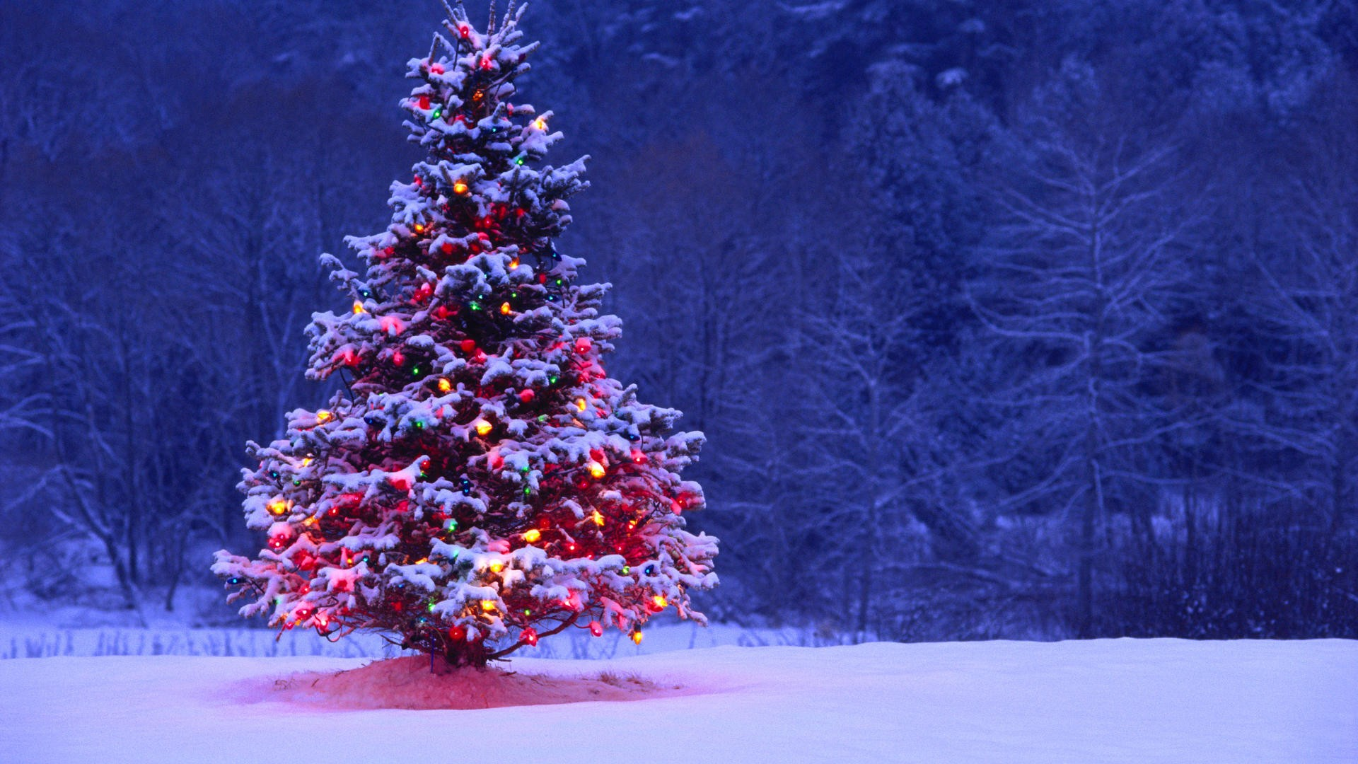 christmas tree hd wallpapers best desktop images widescreen
