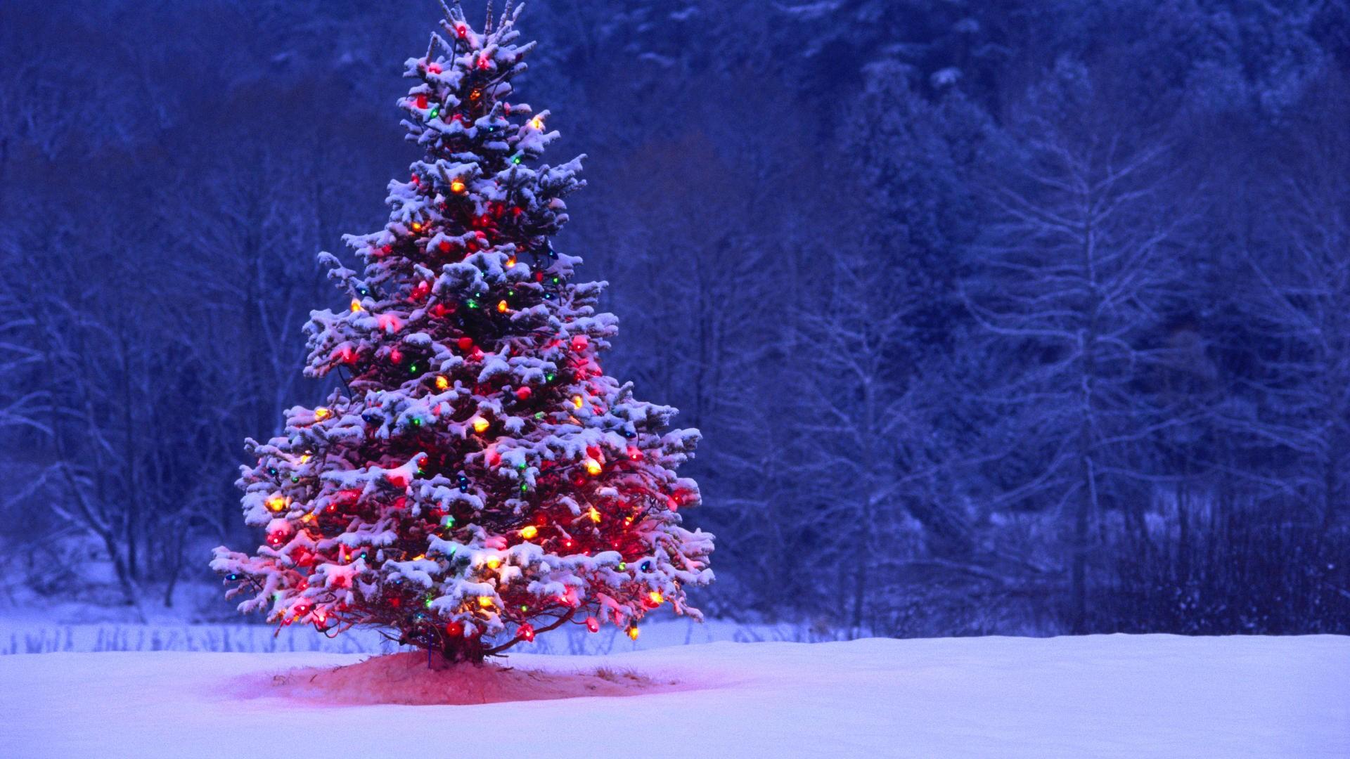 christmas tree hd wallpapers best desktop images widescreen