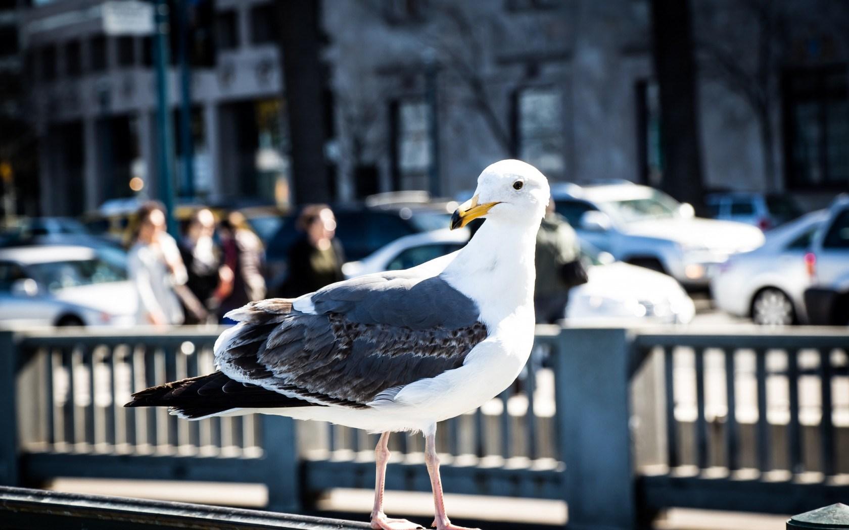 City Street Fence Bird Seagull