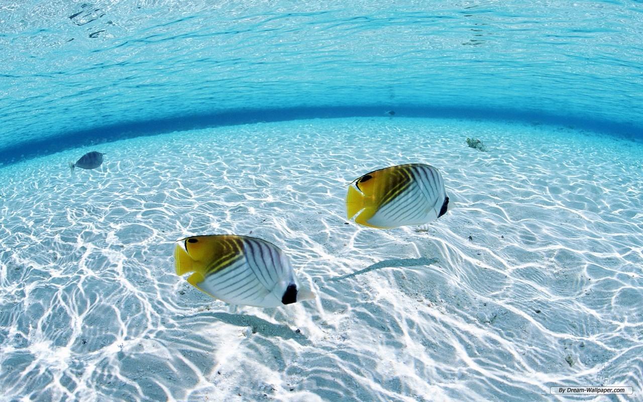 Clear Water Wallpaper