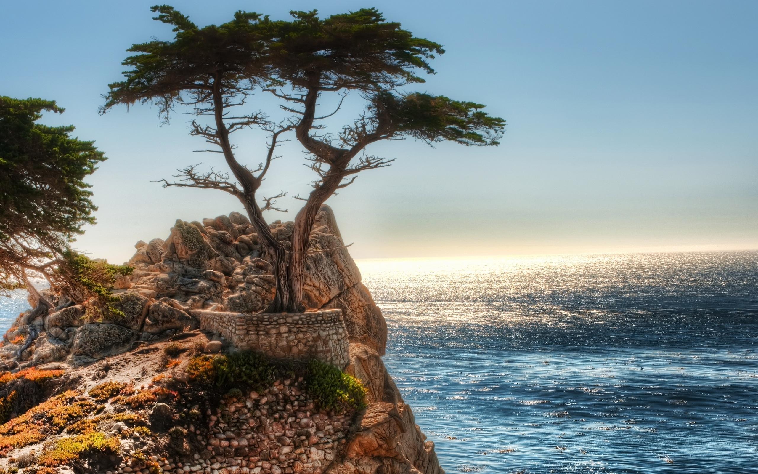 Cliff Tree Coast