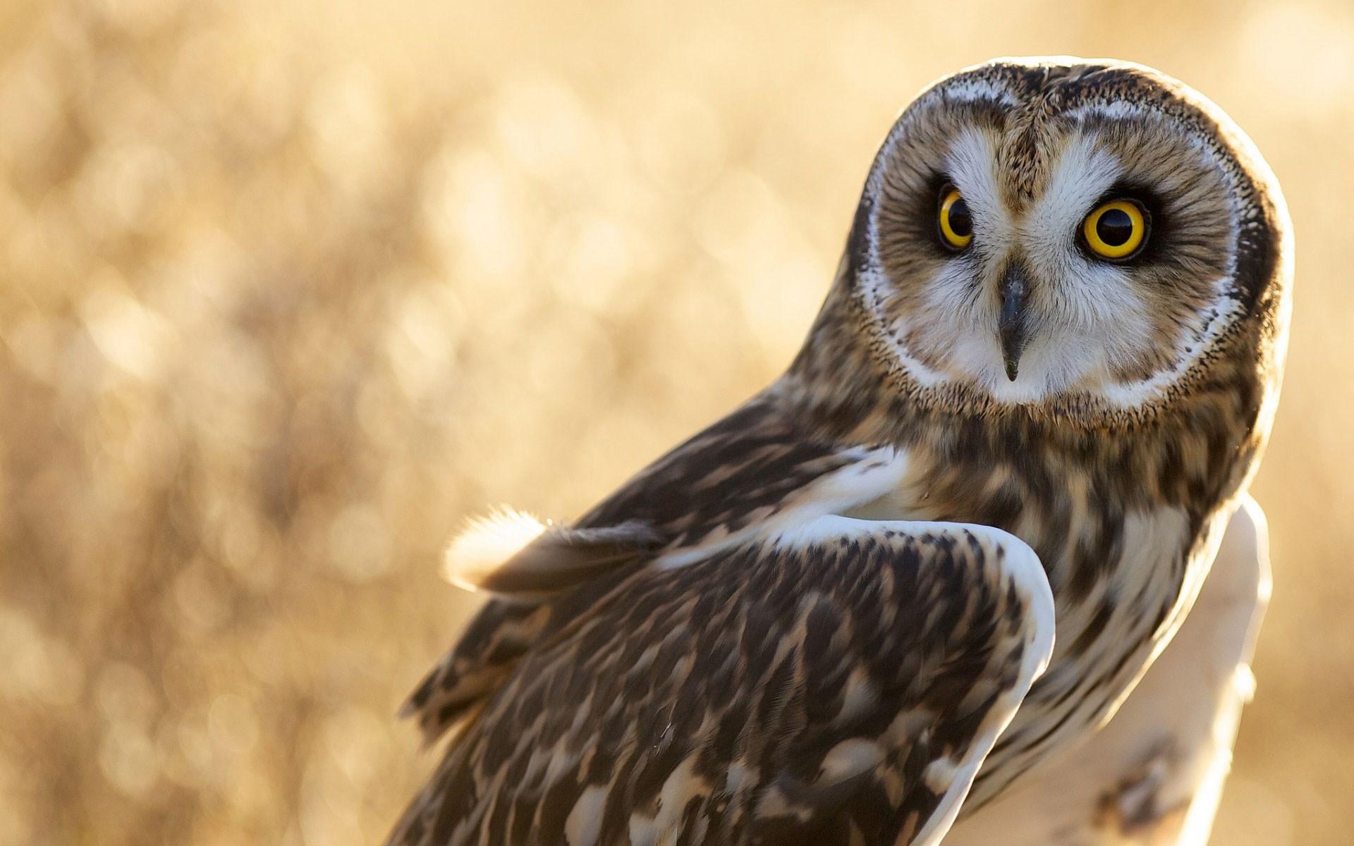 Close-Up Bird Owl