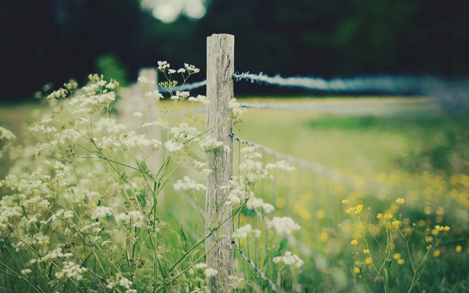 Close-Up Fence Flowers Yellow White Nature