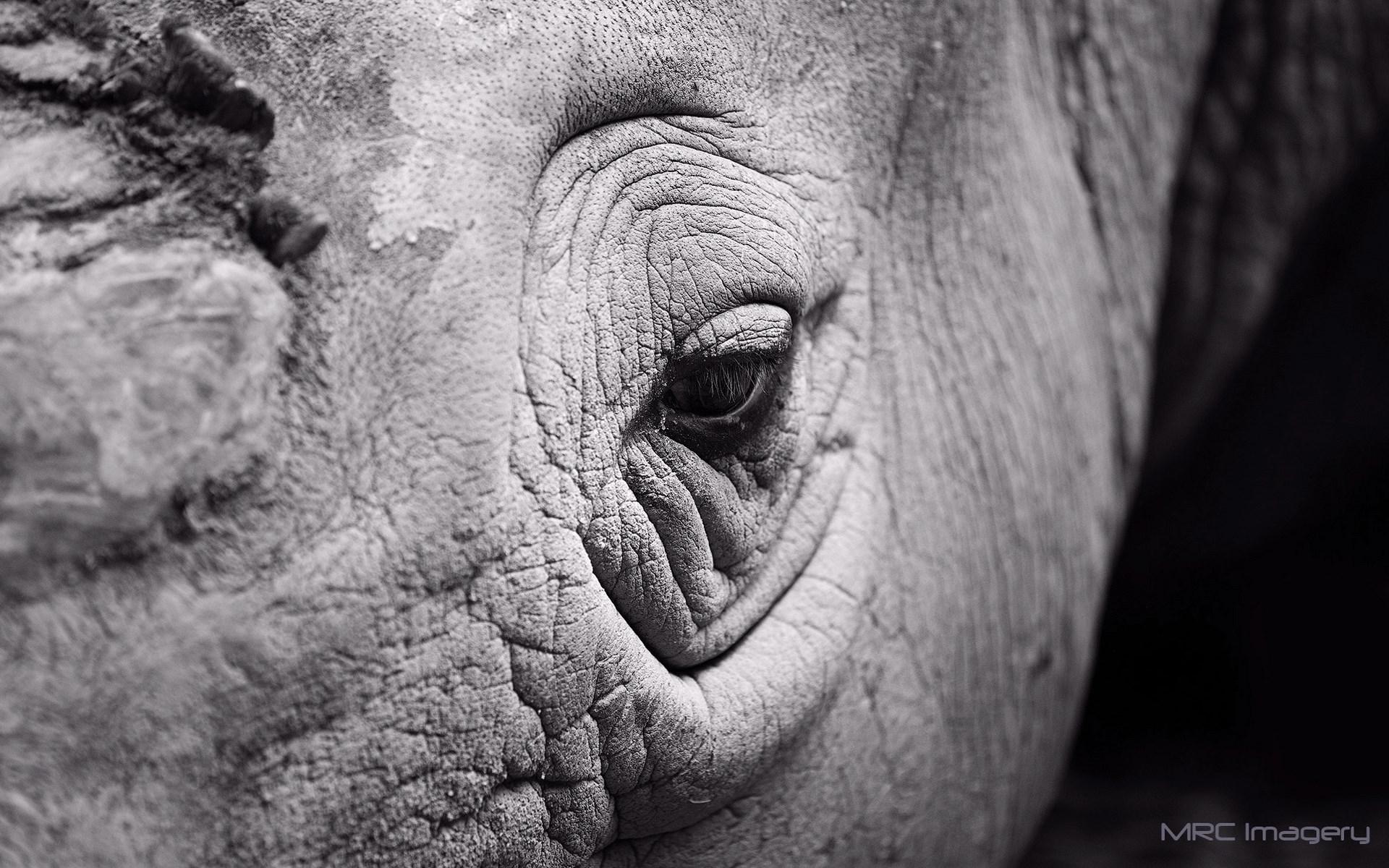 Close-Up Rhinoceros