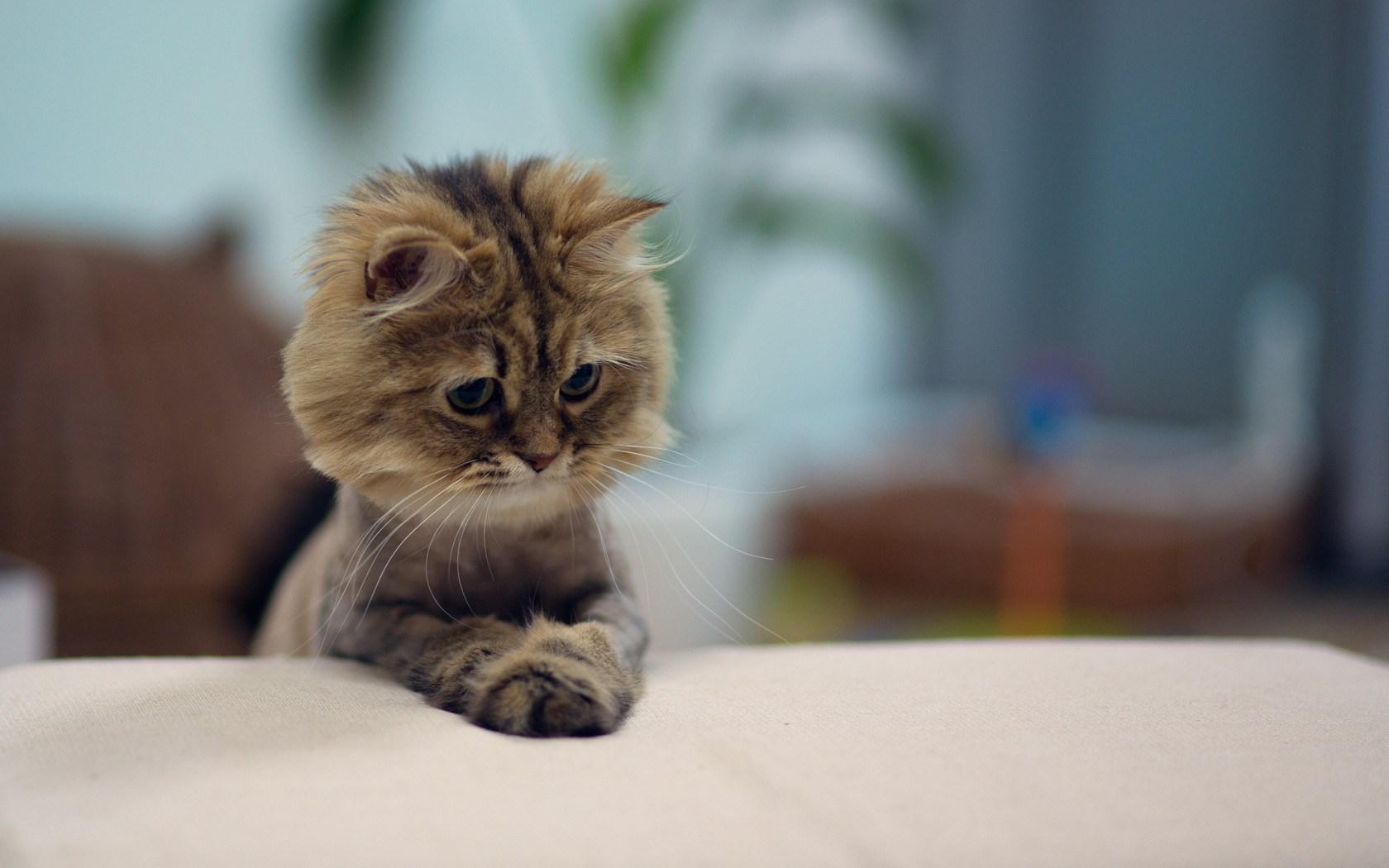 Close-Up Sweet Cat Photo