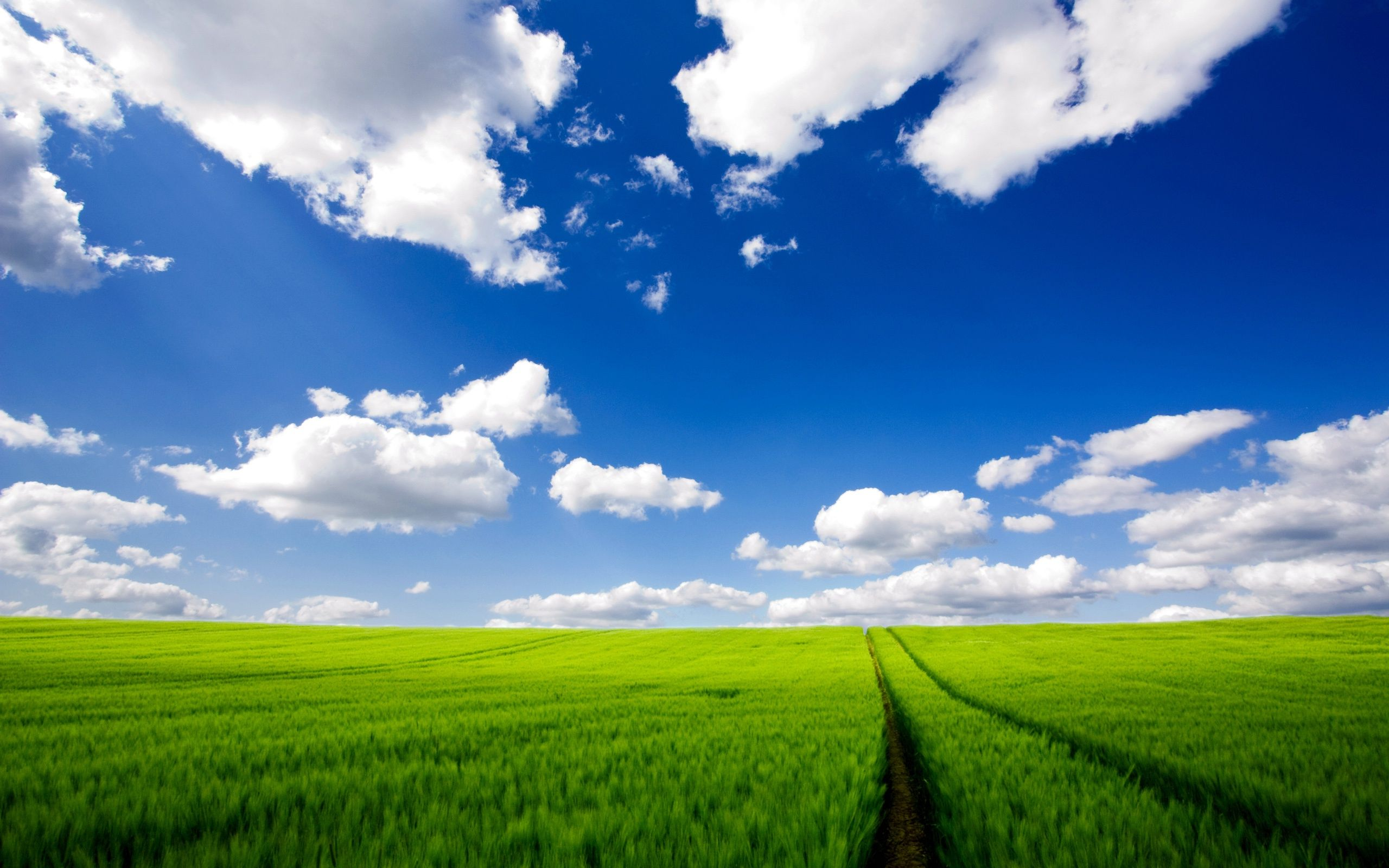 Green Landscape with Cloudy Blue Sky (click to view)