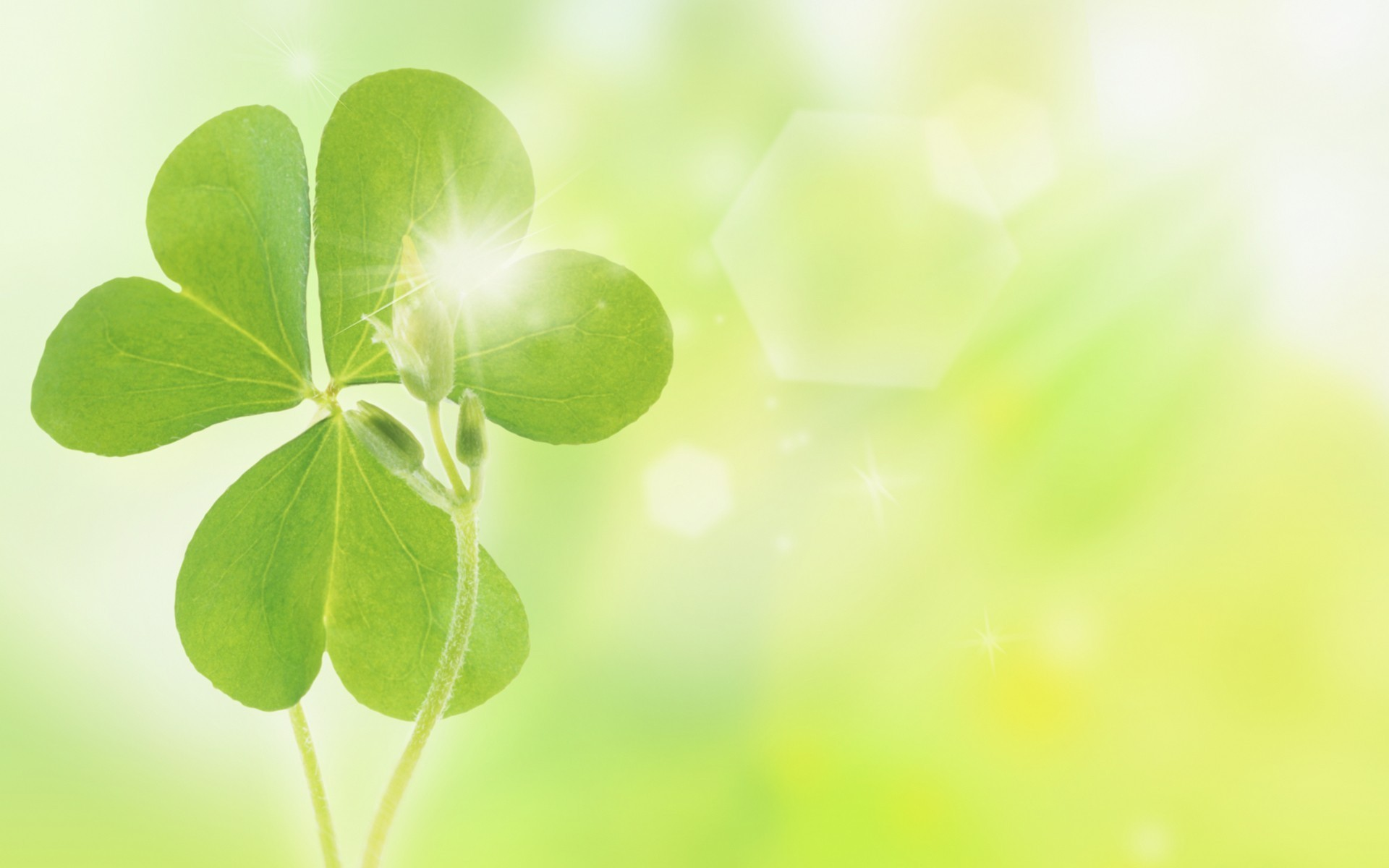HD Wallpaper | Background ID:177624. 1920x1200 Earth Clover