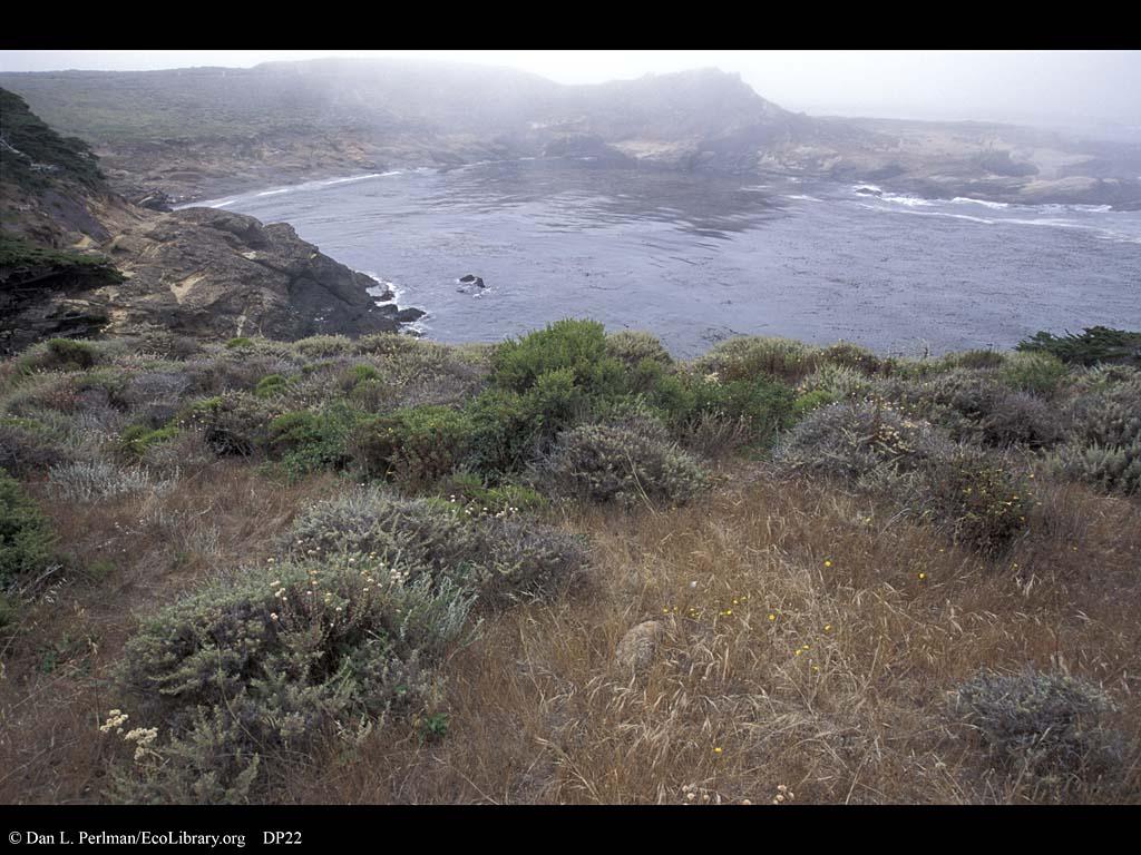 Coastal sage scrub, Point Lobos, California
