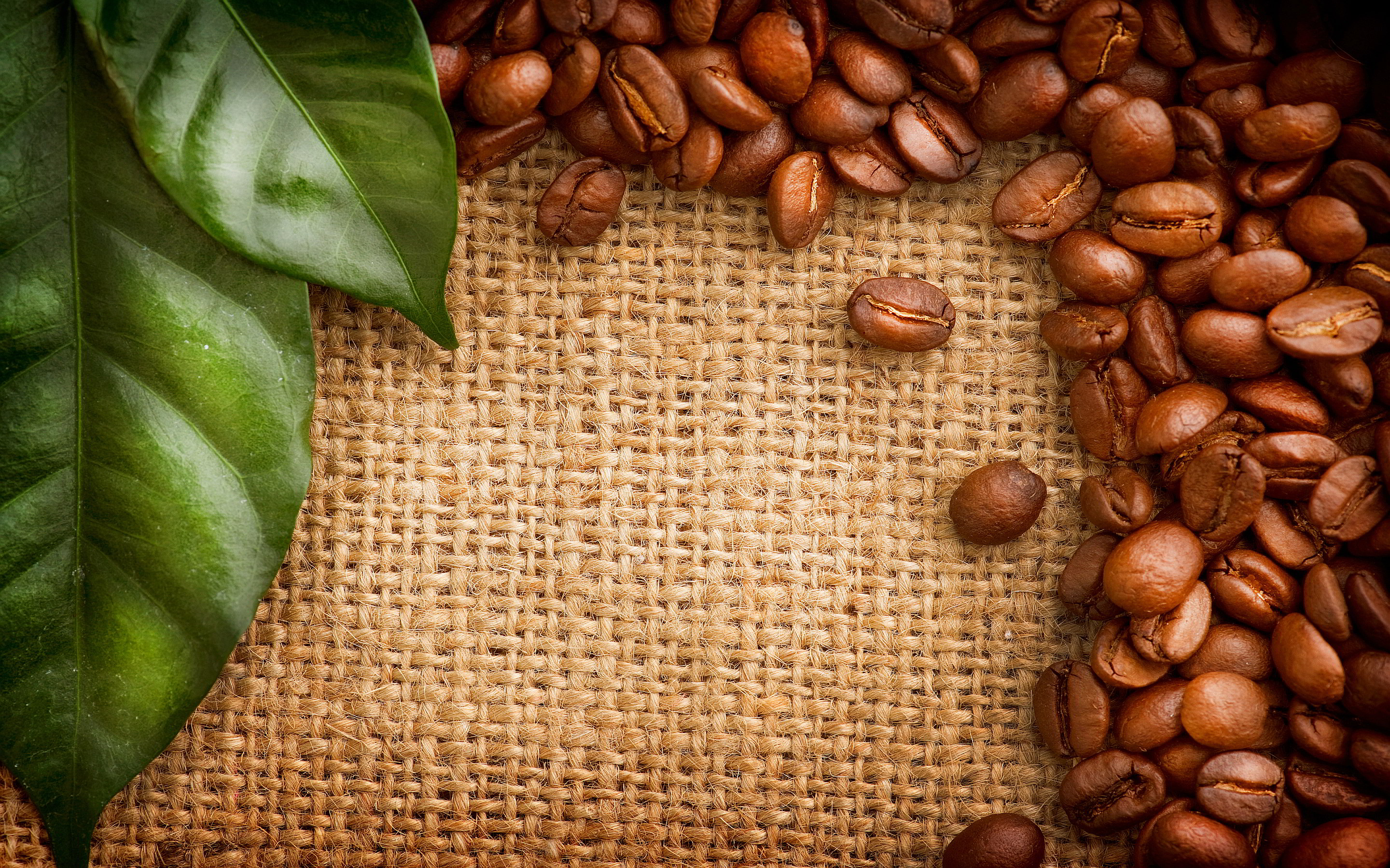 Coffee beans green leaves
