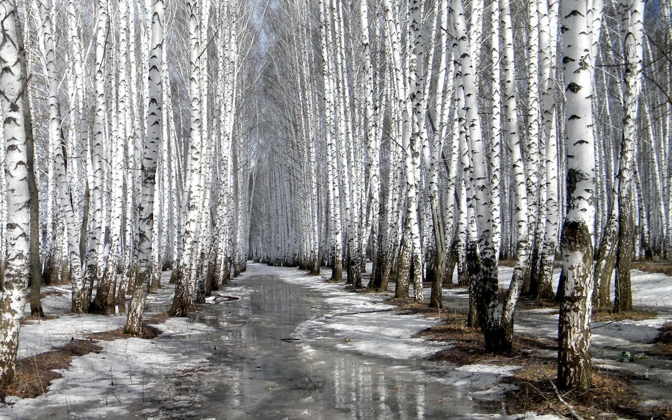 Cold Forest Path