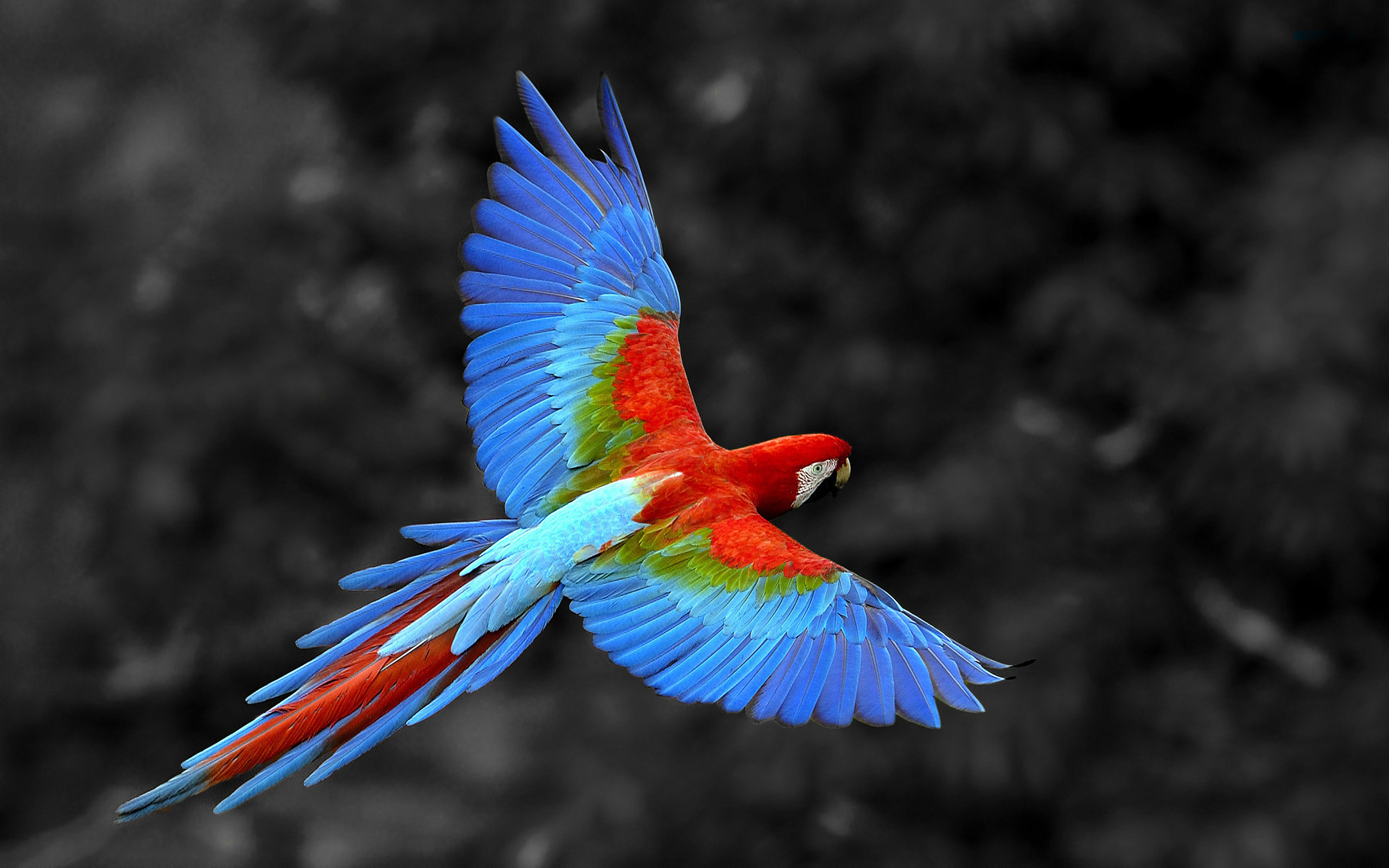 Colored Ara Bird