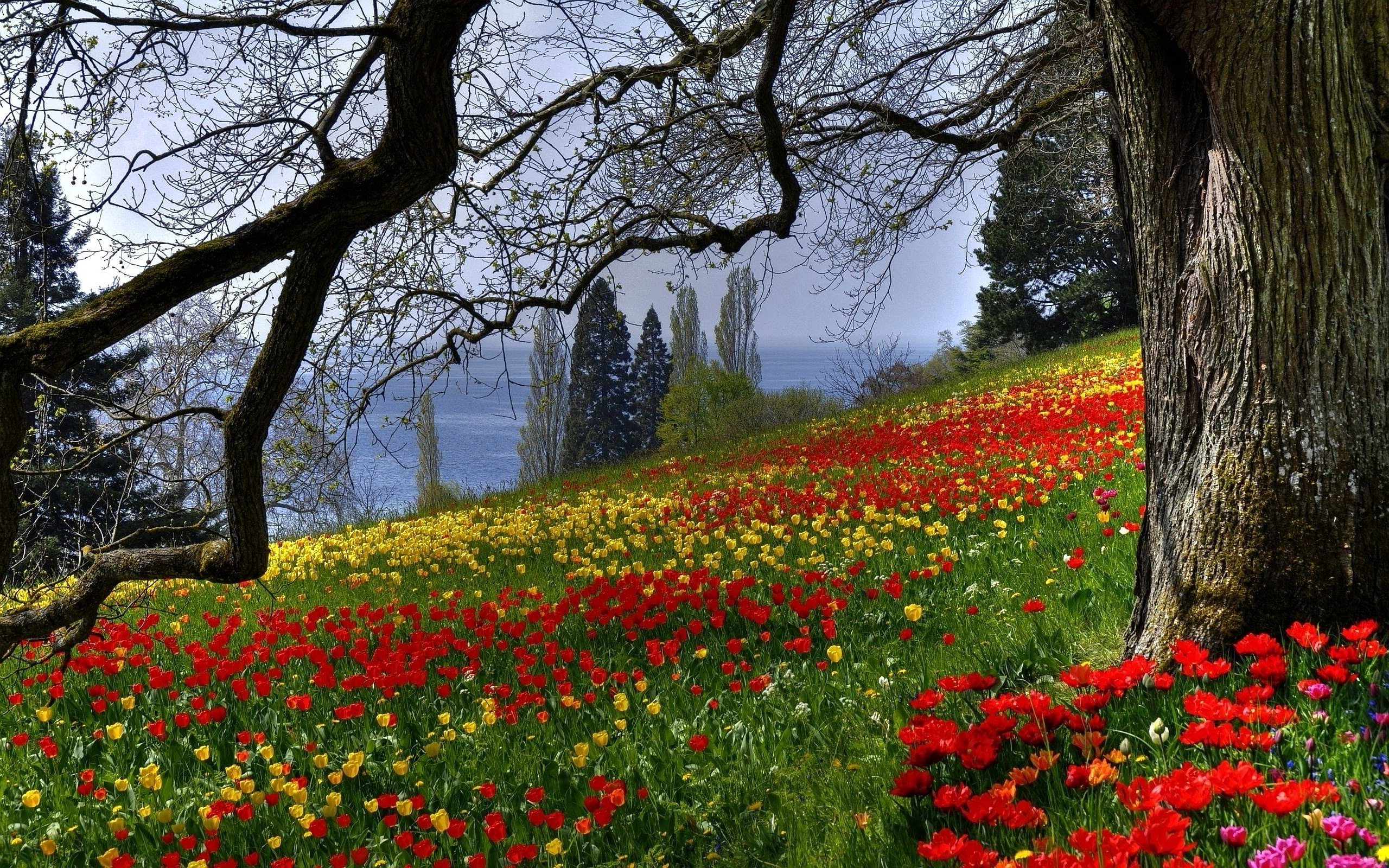 Colored Flowers Meadow