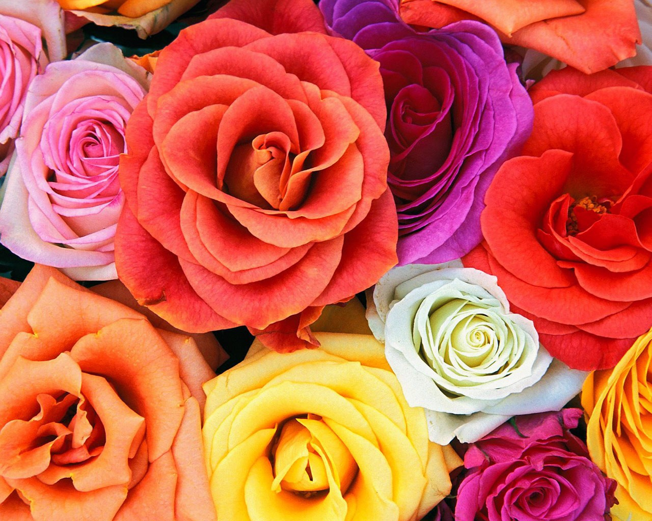 original wallpaper download: Colored roses - 1280x1024