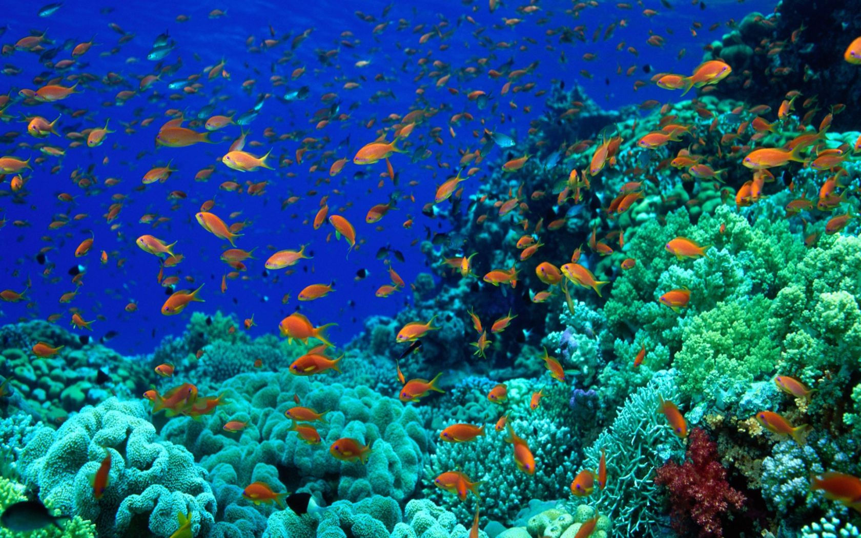 Colorful Fish Underwaterworld Wallpaper 1680x1050 12298