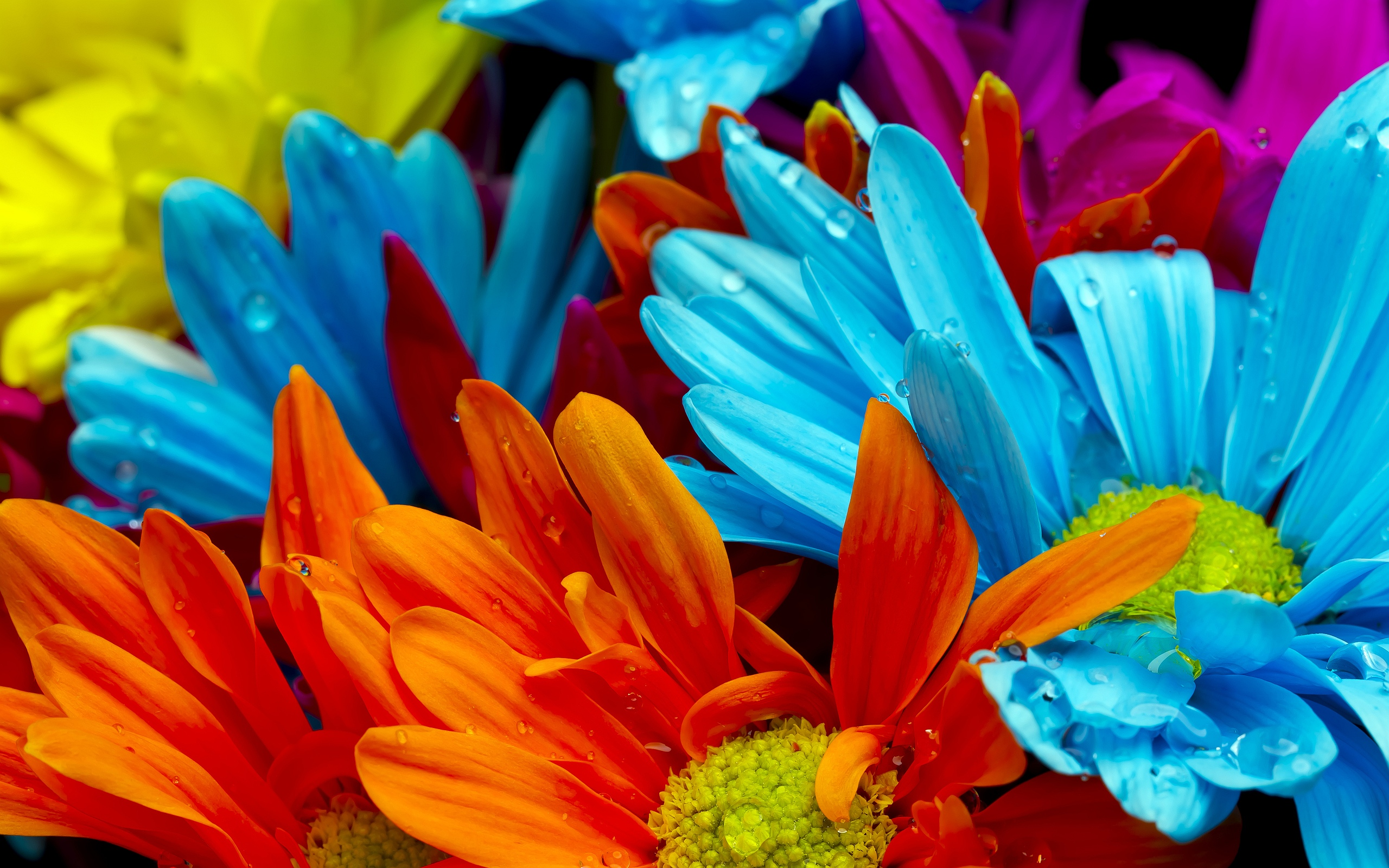 ... Colorful flowers Wallpapers Pictures Photos Images