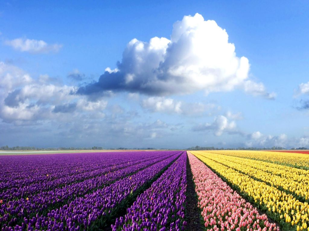 Colorful flowers field