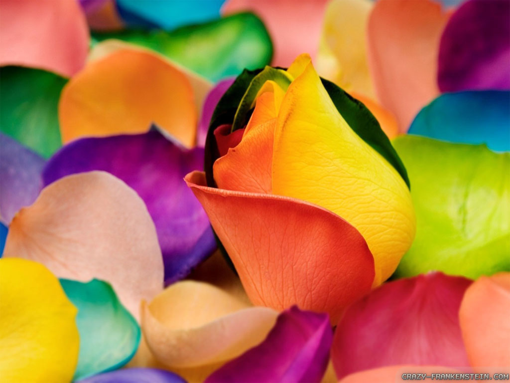 Colorful Flowers HD Desktop Wallpaper