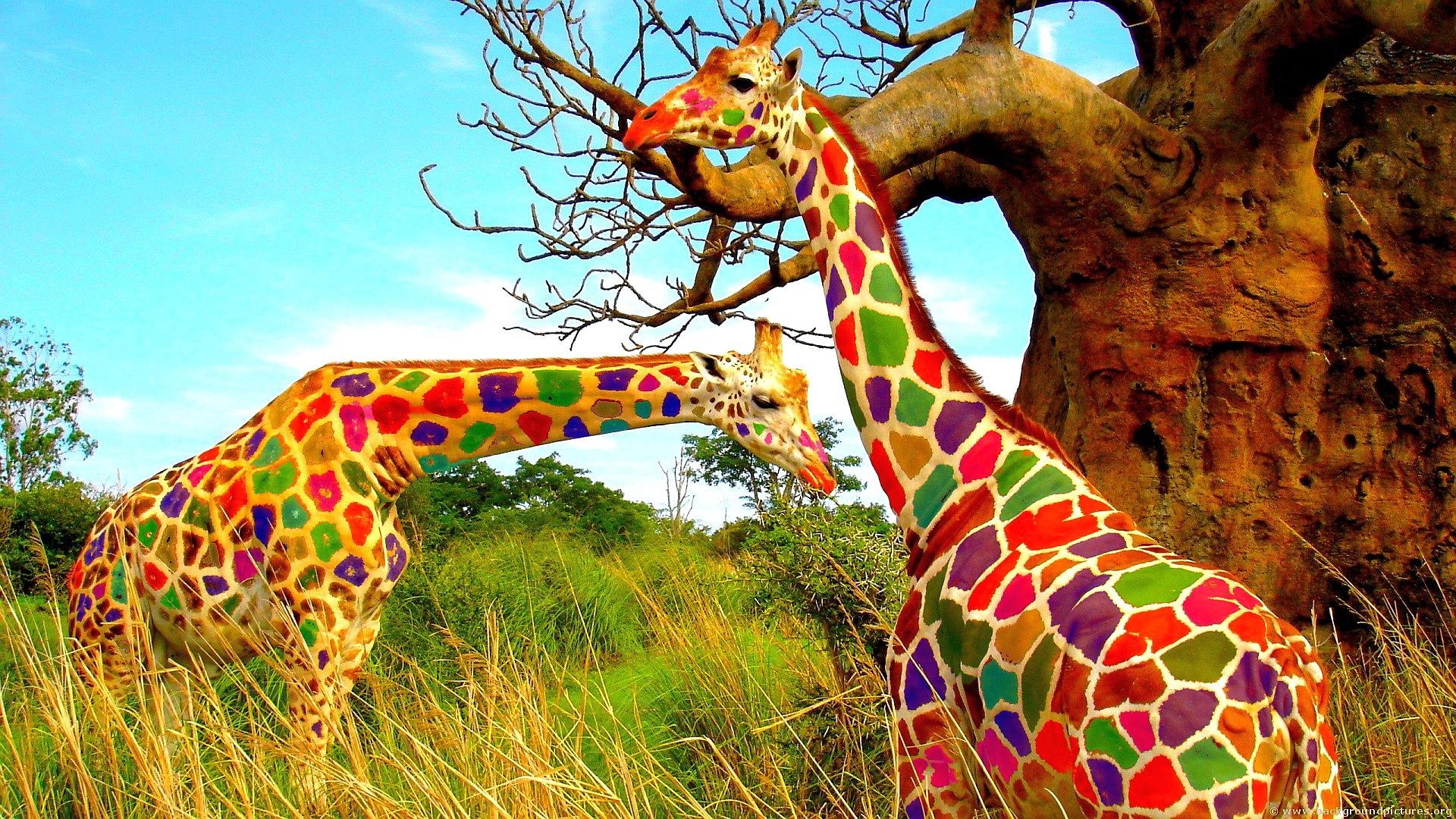 Colorful giraffes art