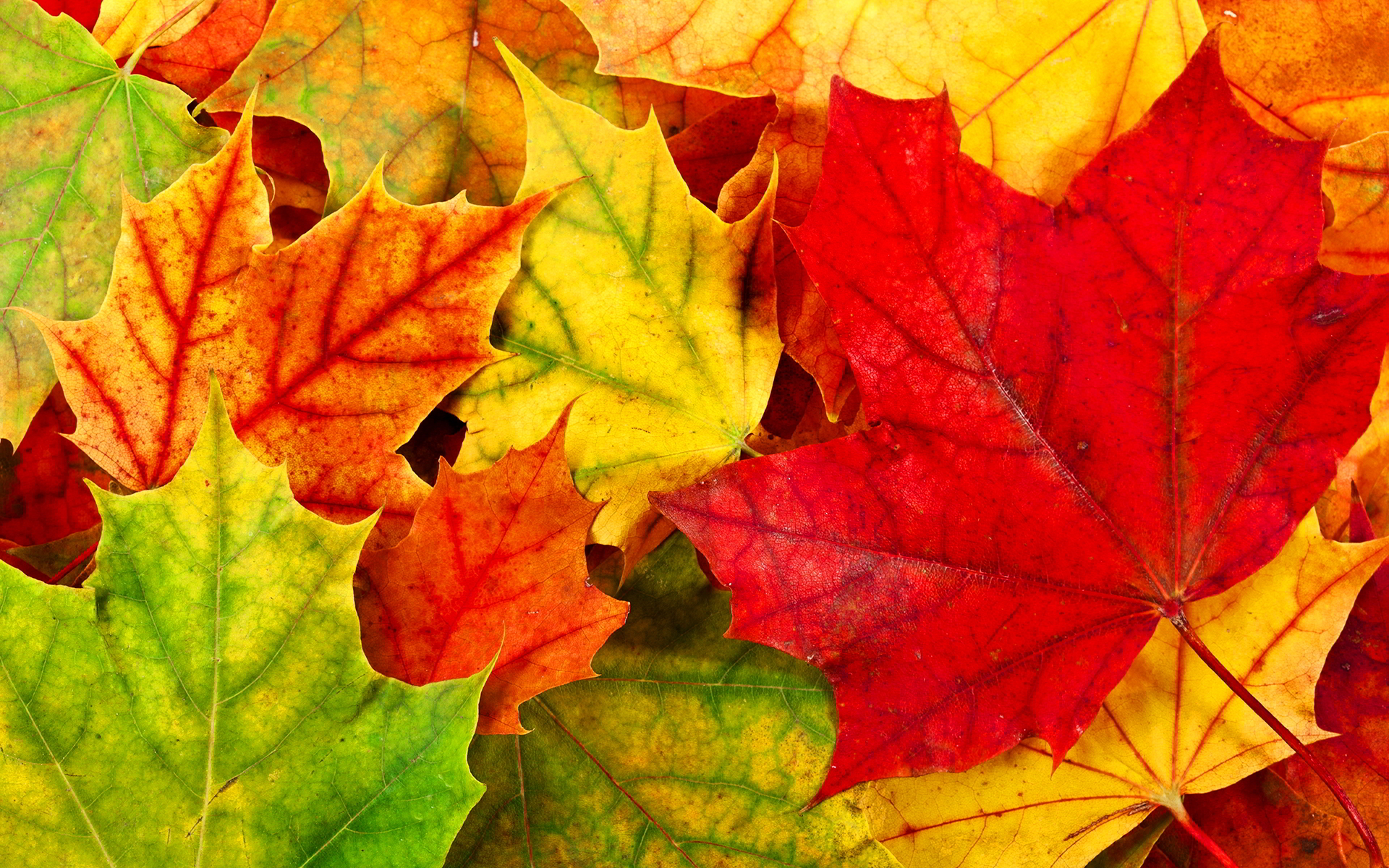 Free Colorful Leaves Wallpaper