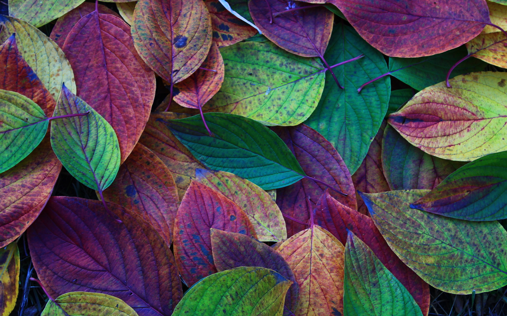 Background and Colorful Leaves Wallpapers
