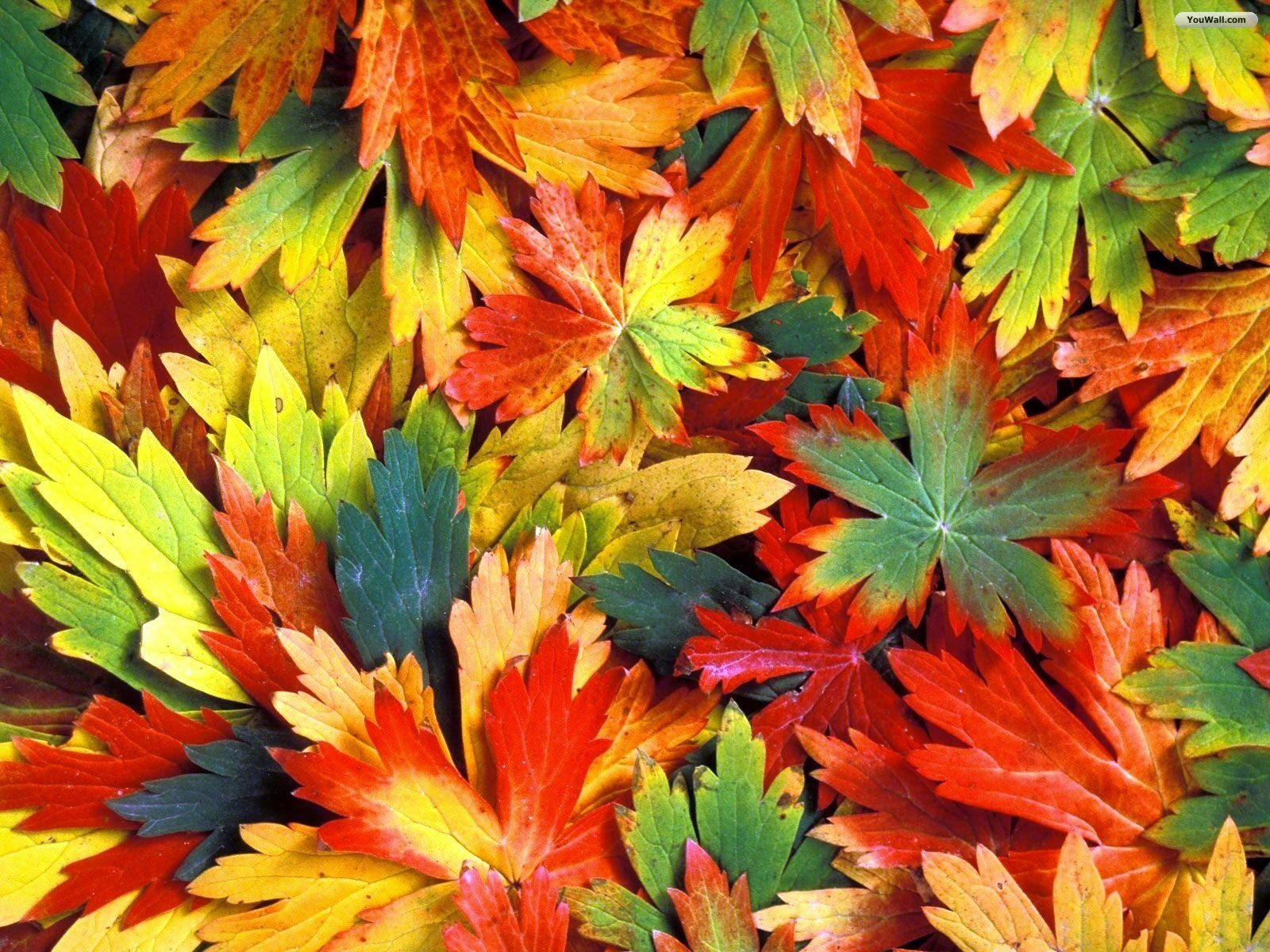 Colorful Autumn Leaves Hd Images 3 HD Wallpapers