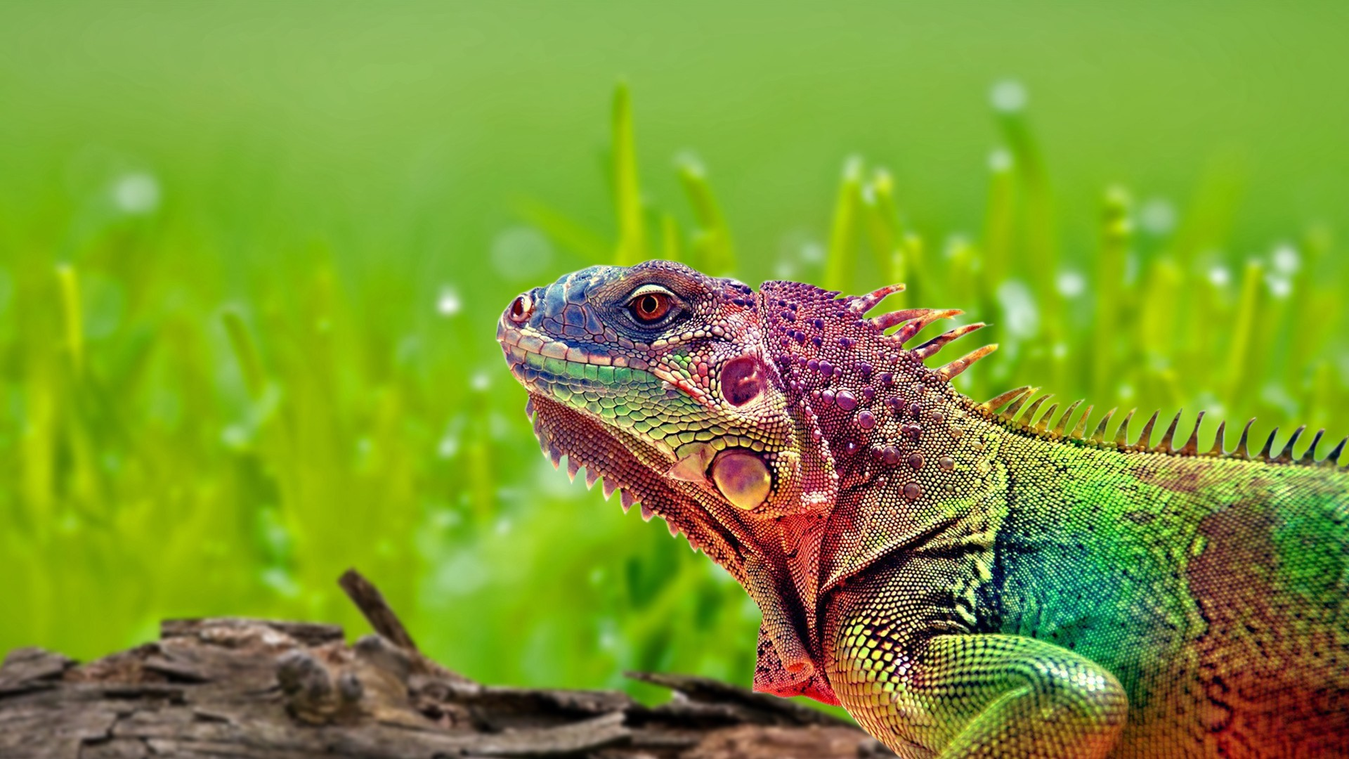 Colorful Lizard Wallpaper