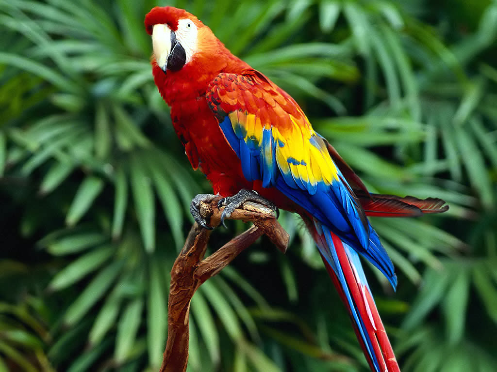 beautiful colorful parrot ...
