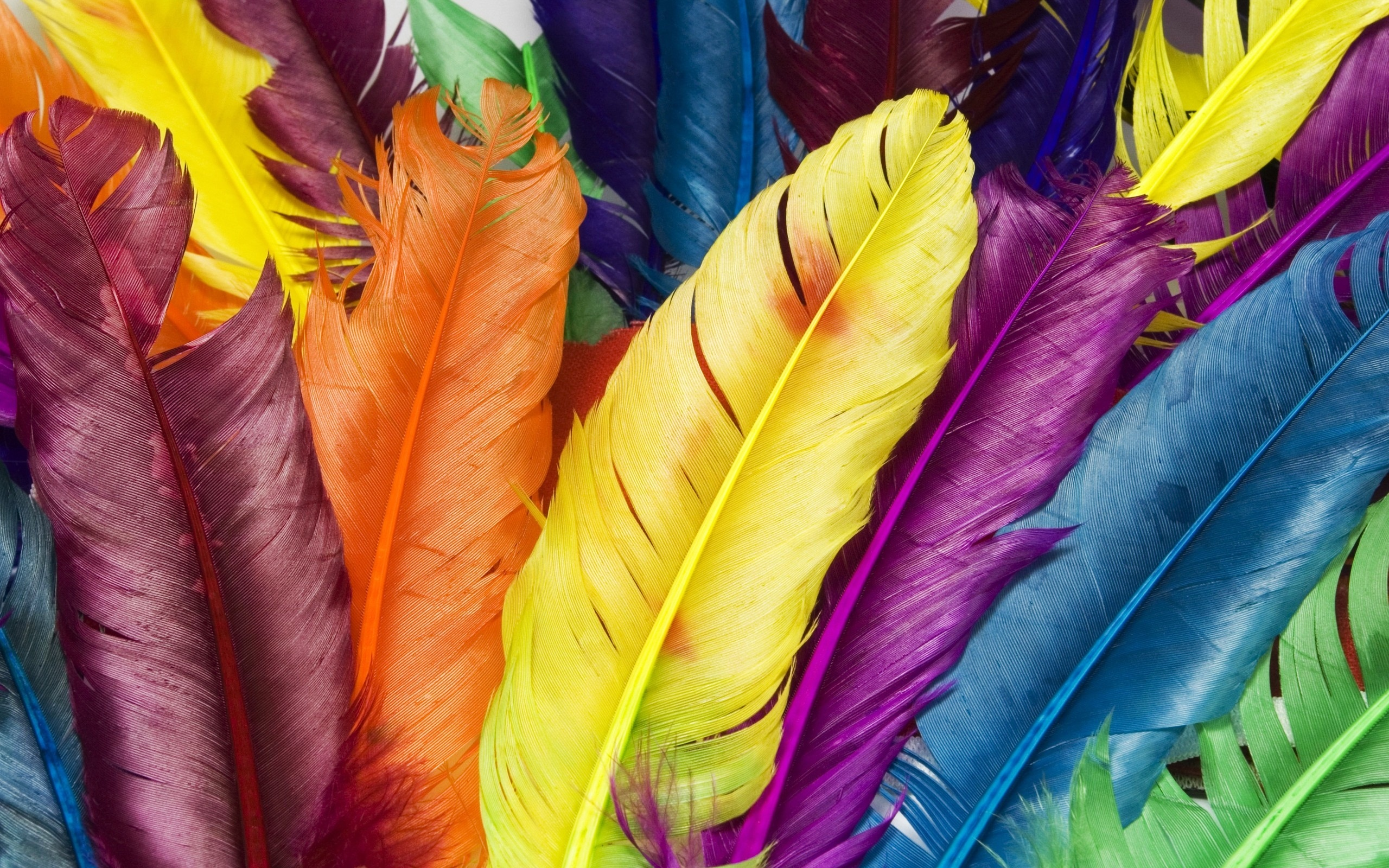 Feathers in Colors. «