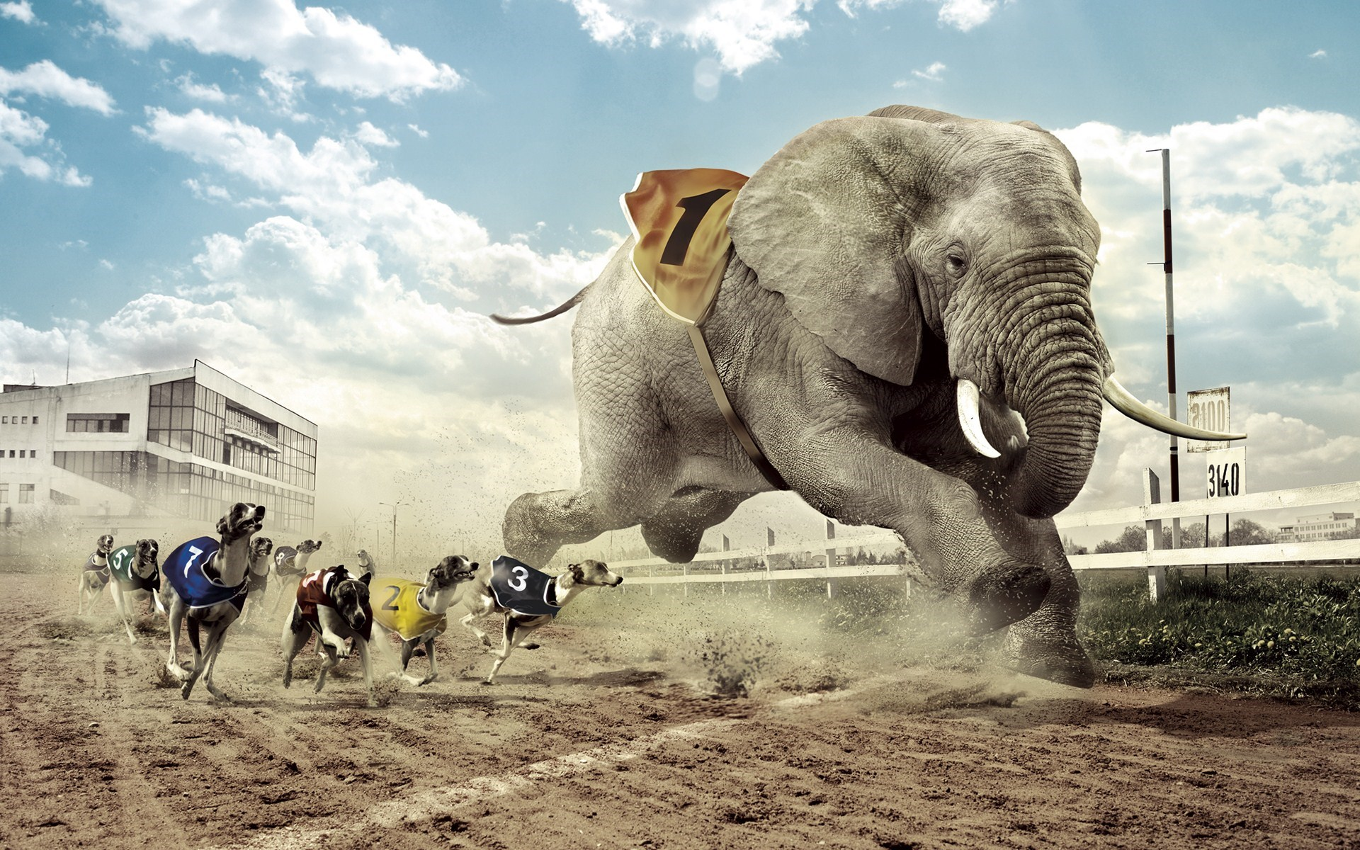 Competition Racing Dogs Elephant Funny Creative