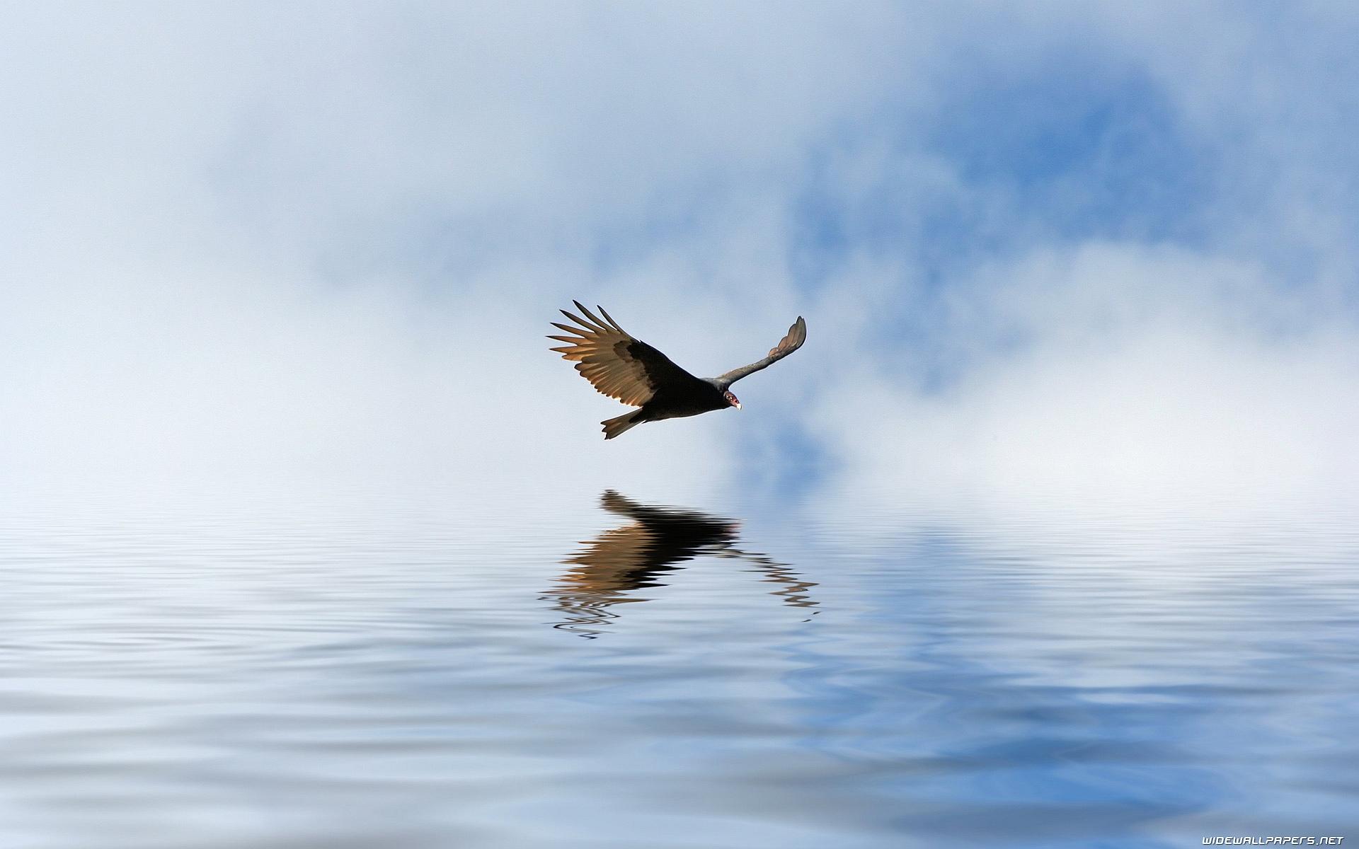 Condor Fly Sea