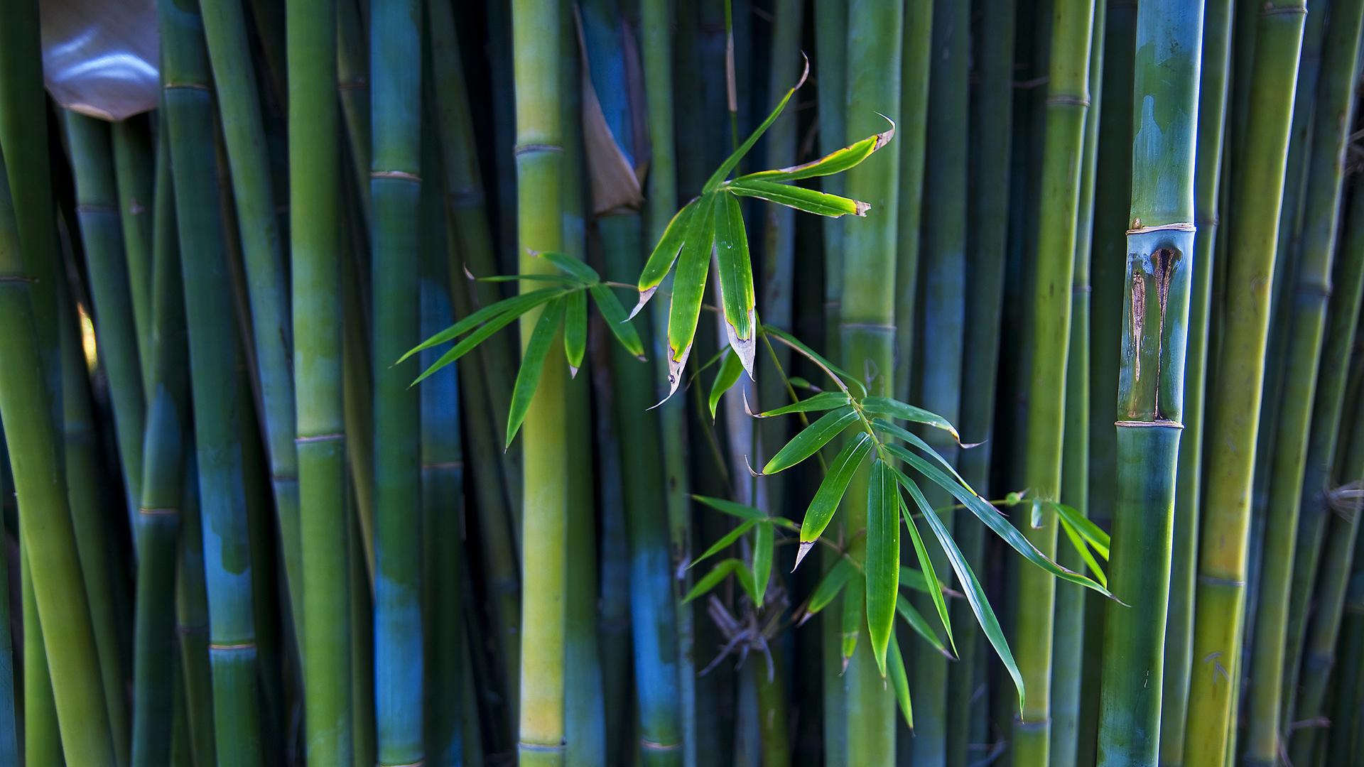Cool Bamboo Wallpaper