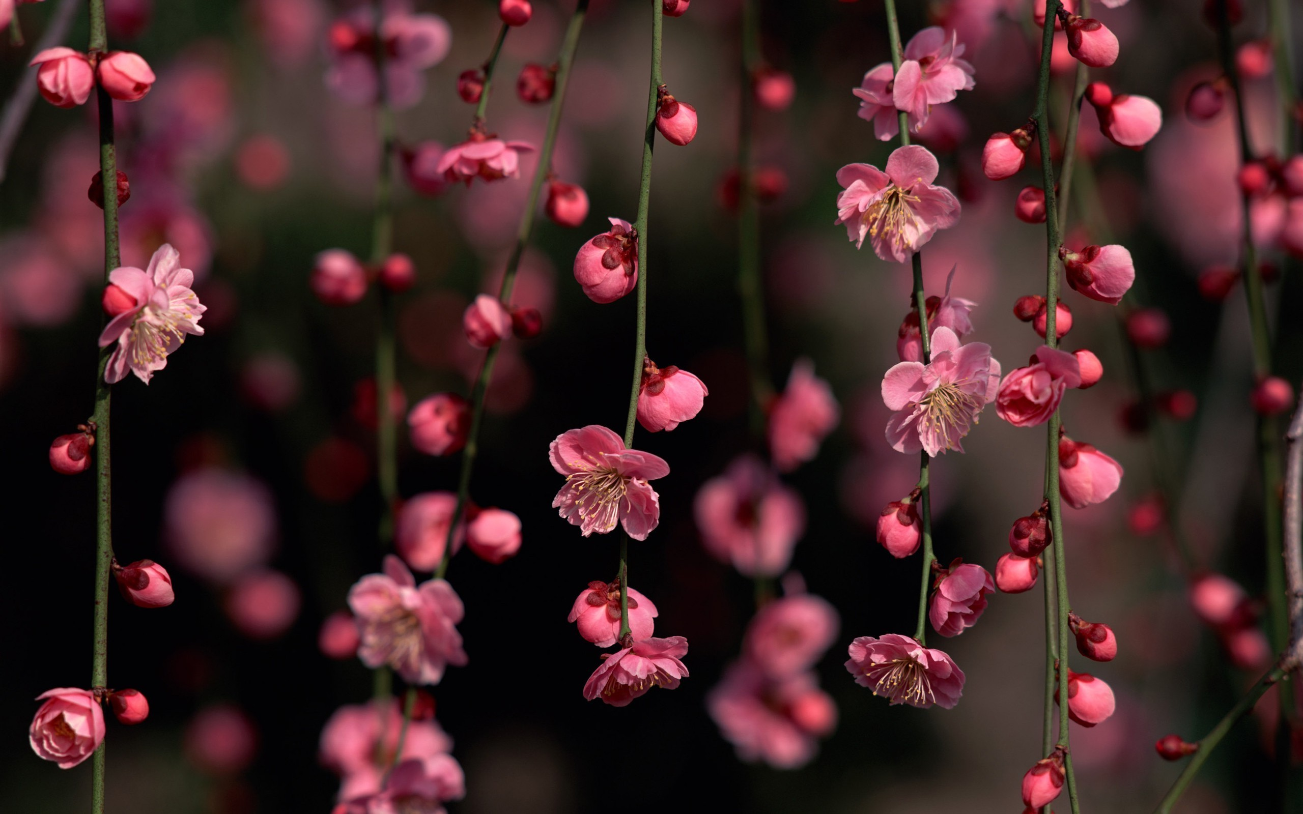 Cool Blossom Wallpaper