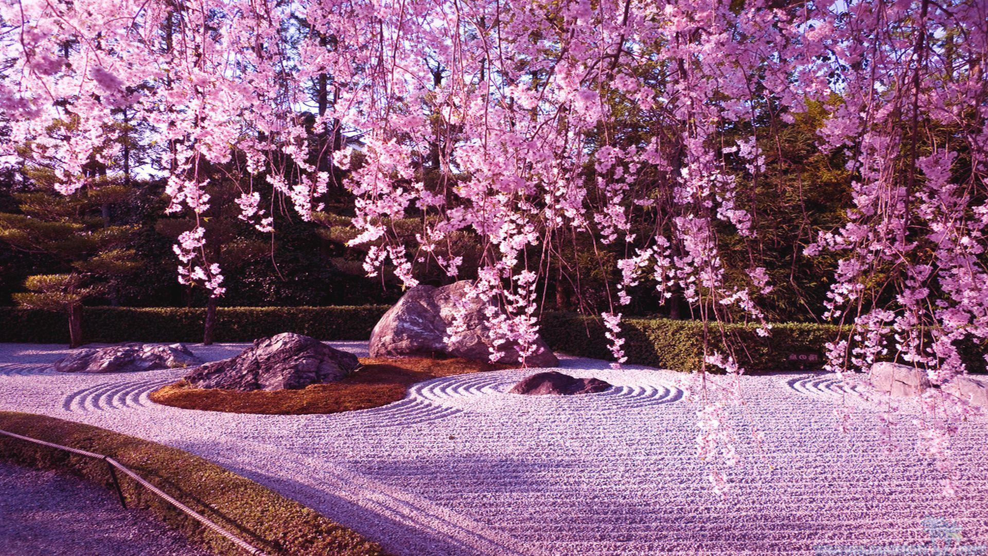 Cool Cherry Blossom Wallpaper