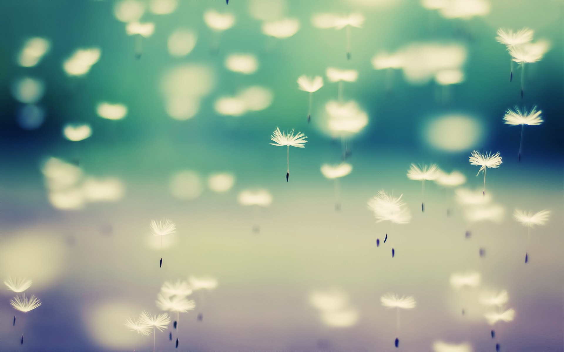 Cool Dandelion Seeds Wallpaper