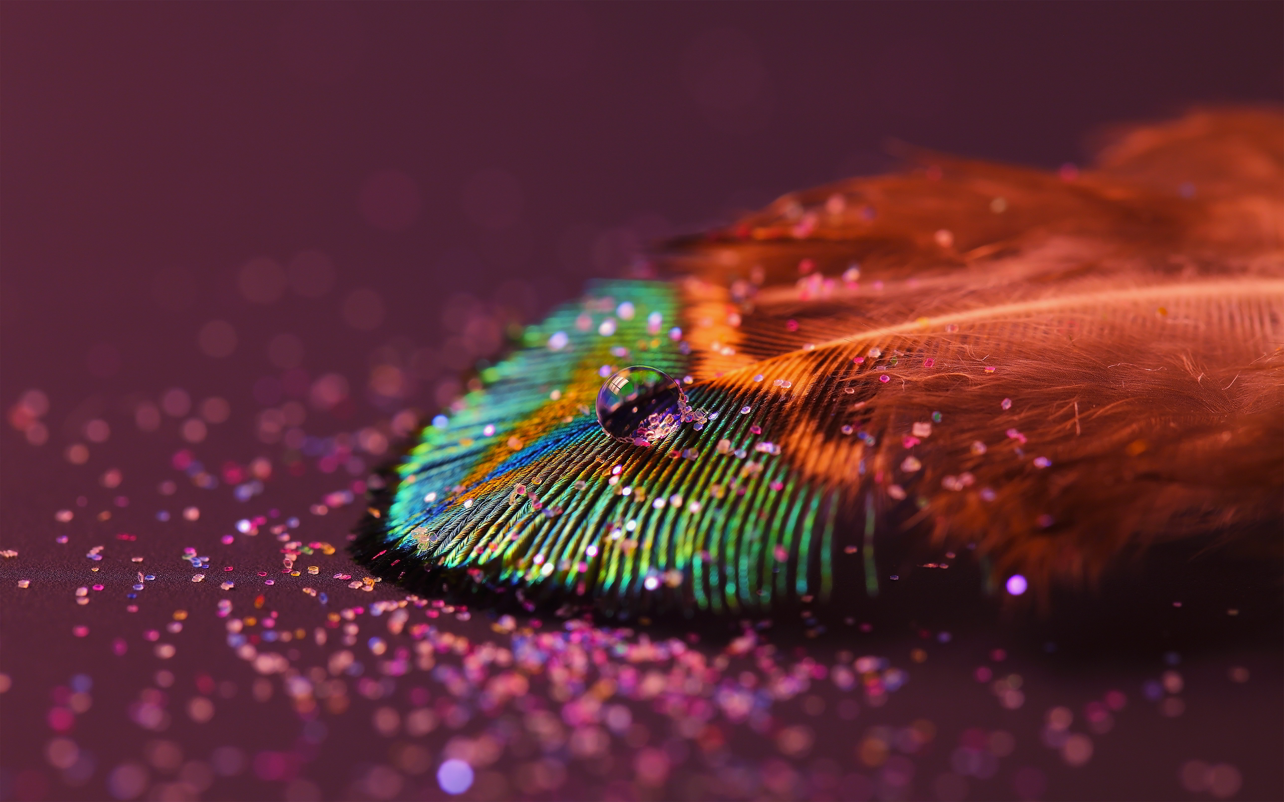 Macro Drop Feather Wallpaper Image Wallpaper